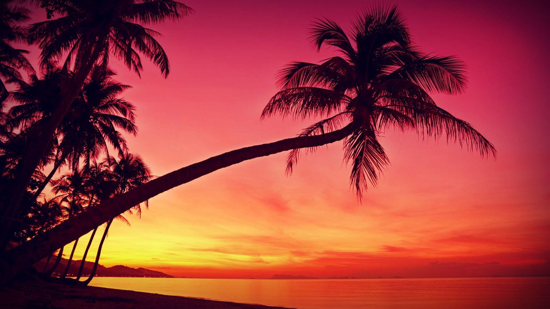 Prime Palm Tree Desktop Wallpapers 73 Background Pictures Download Free Architecture Designs Scobabritishbridgeorg