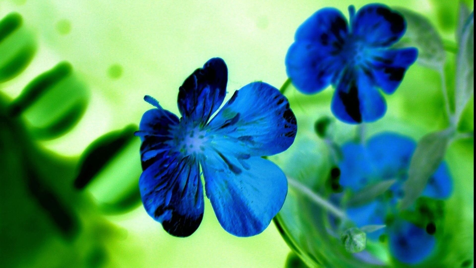 Blue flowers wallpapers 67 background pictures 1920x1200 pretty blue flower wallpaper 41045 mightylinksfo