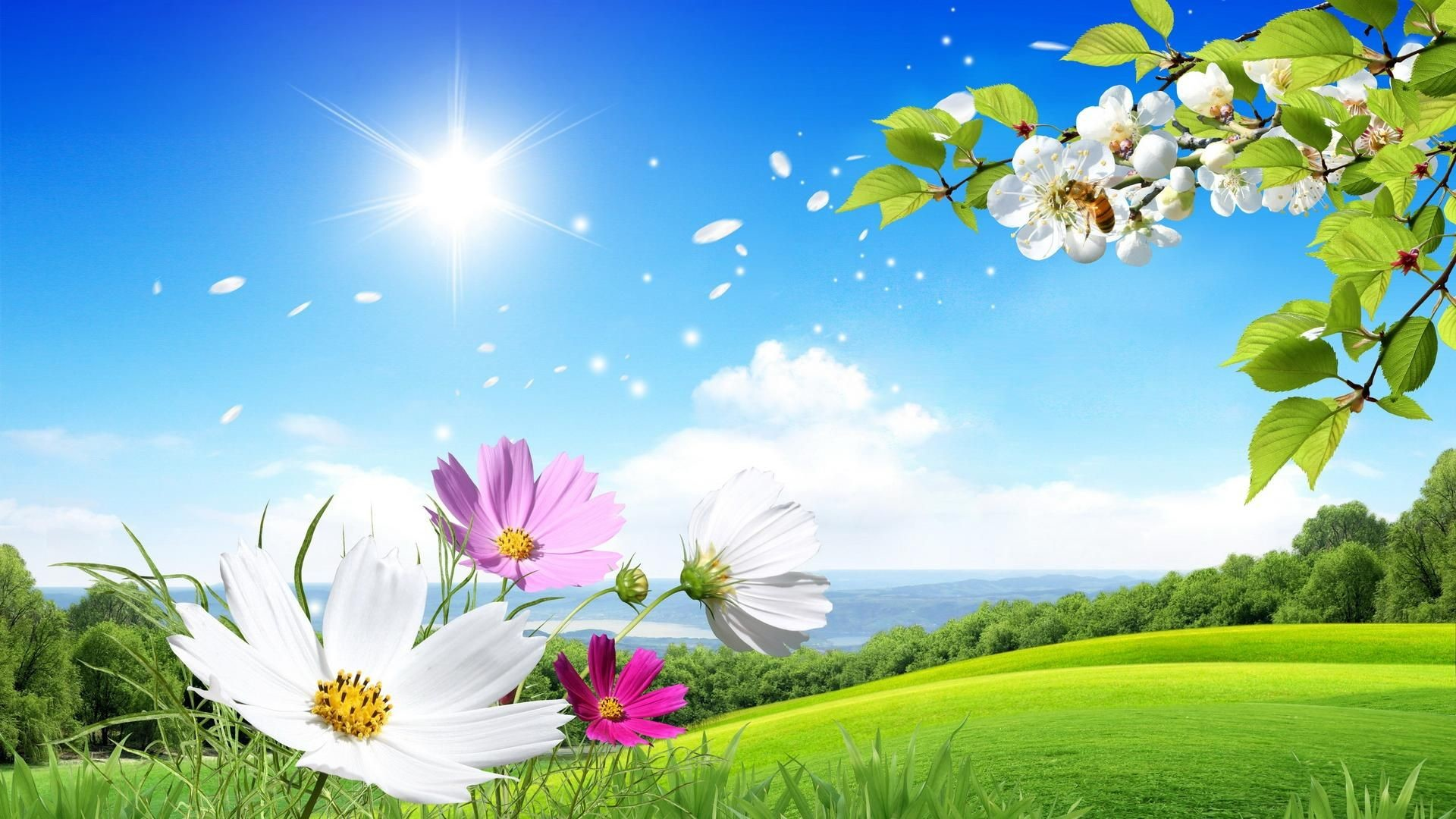 Beautiful Nature Wallpapers Hd 72 Background Pictures