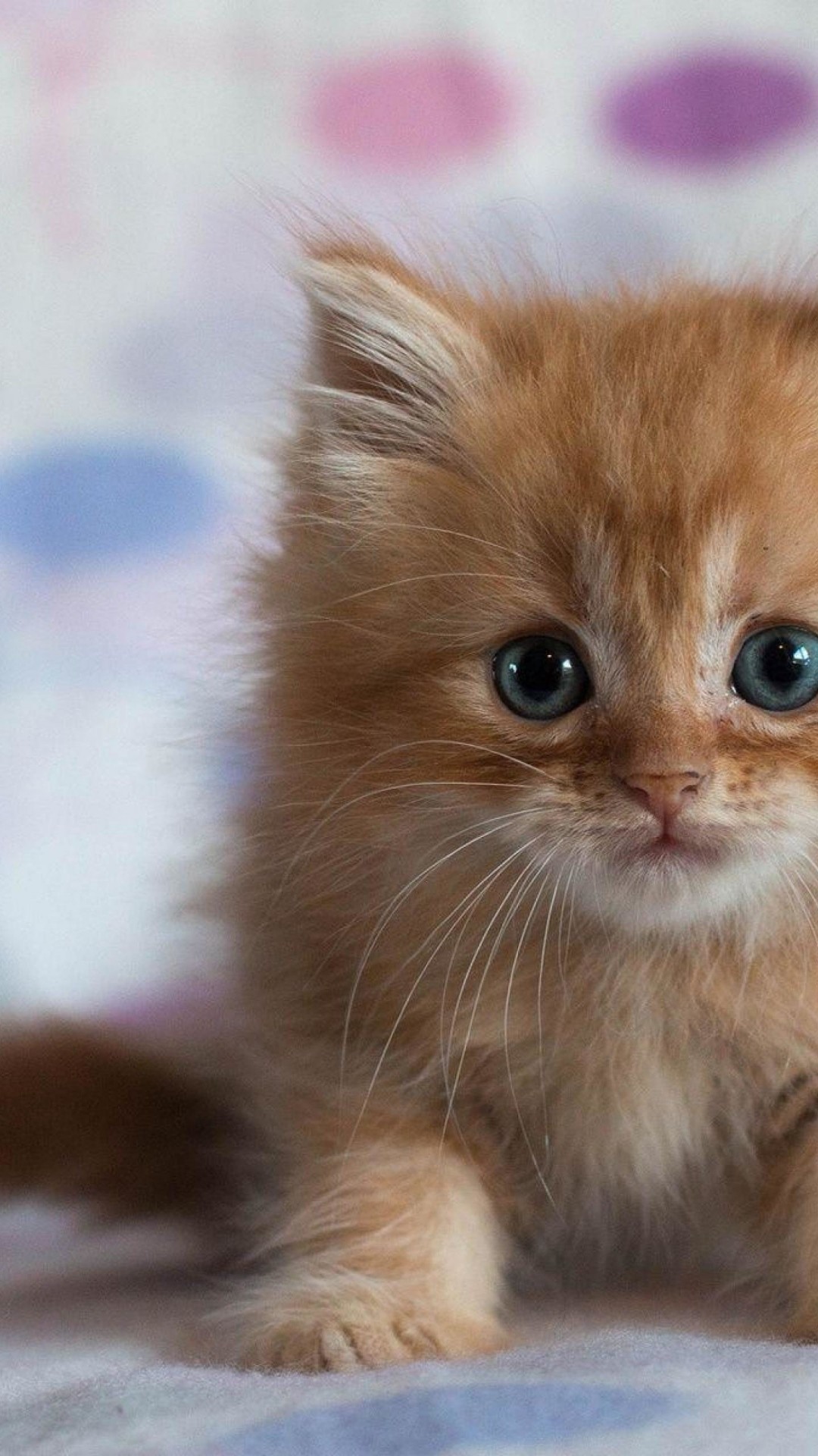 Funny Kittens Wallpapers 68 Background Pictures