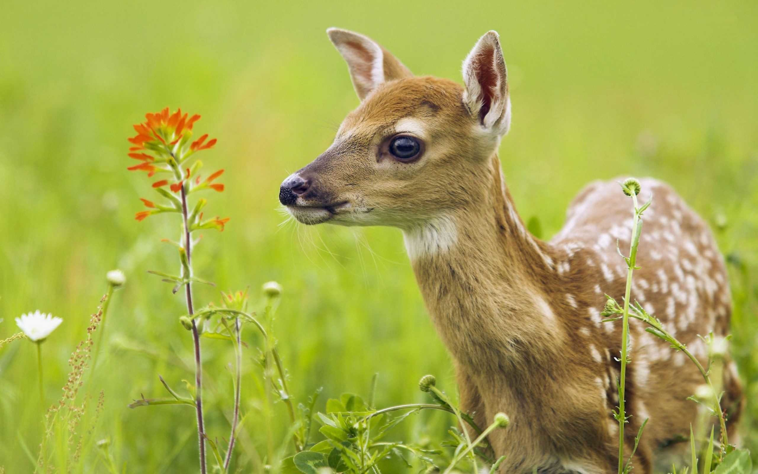 baby animals wallpapers (65+ background pictures)