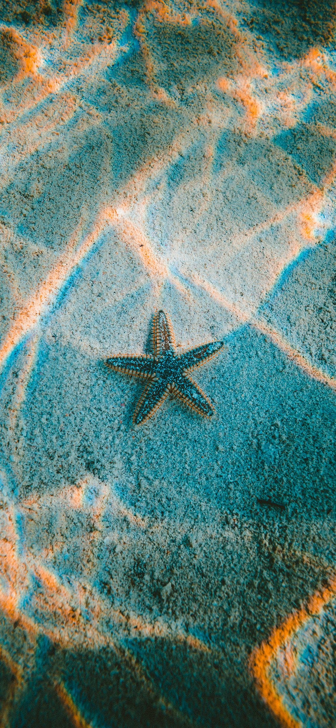 Starfish Wallpapers 61 Background Pictures