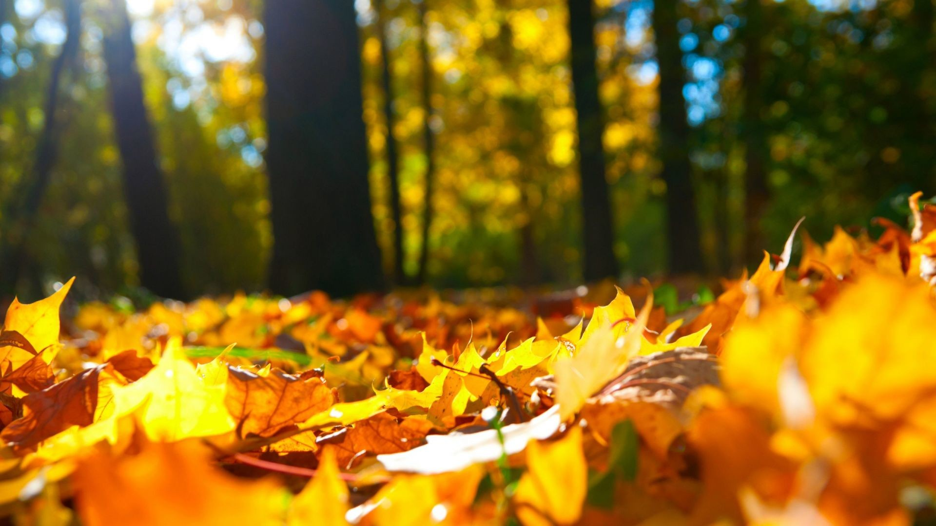 Desktop Wallpapers Fall (69+ Background Pictures