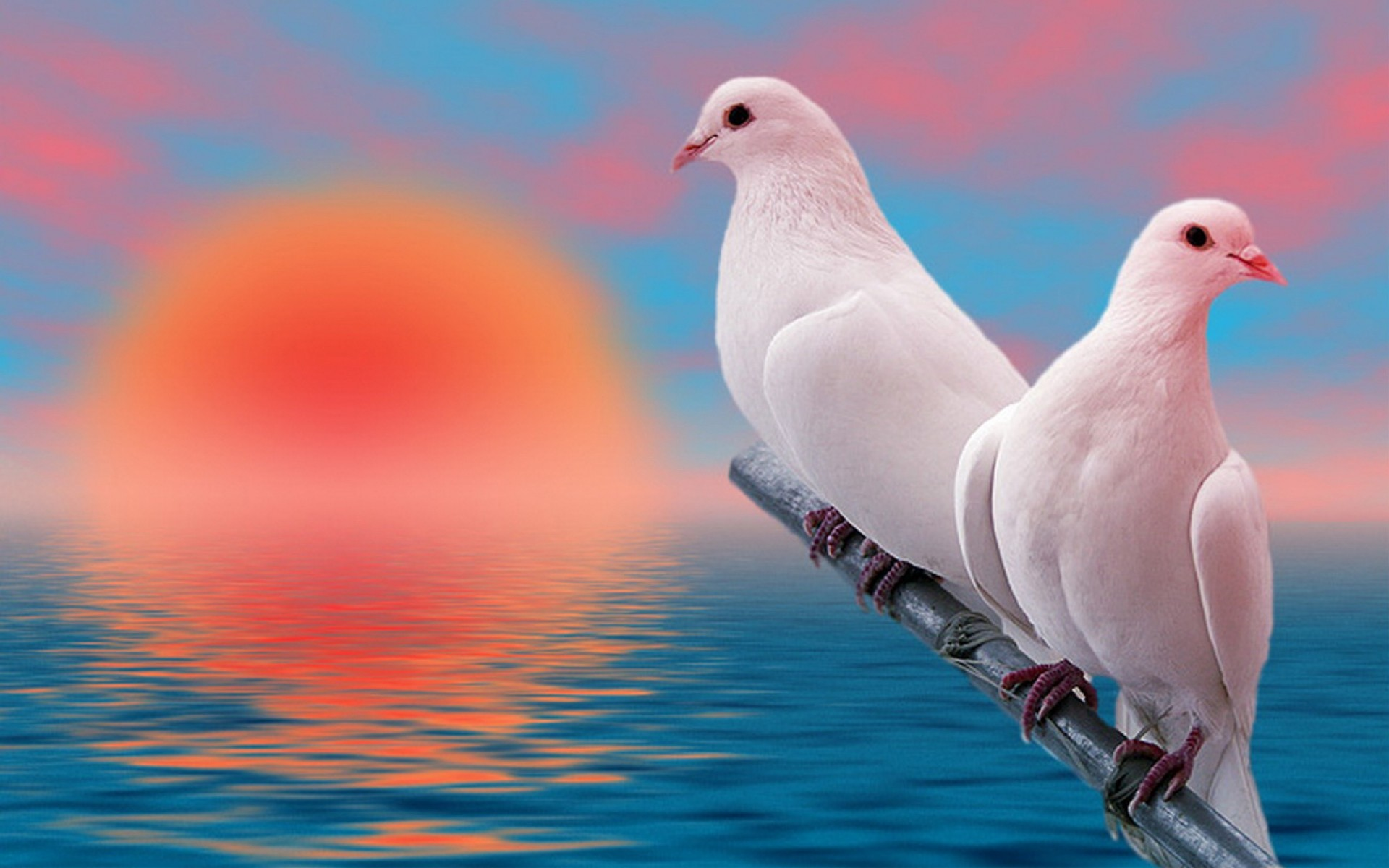 Lovely Birds Wallpapers 46 Background Pictures