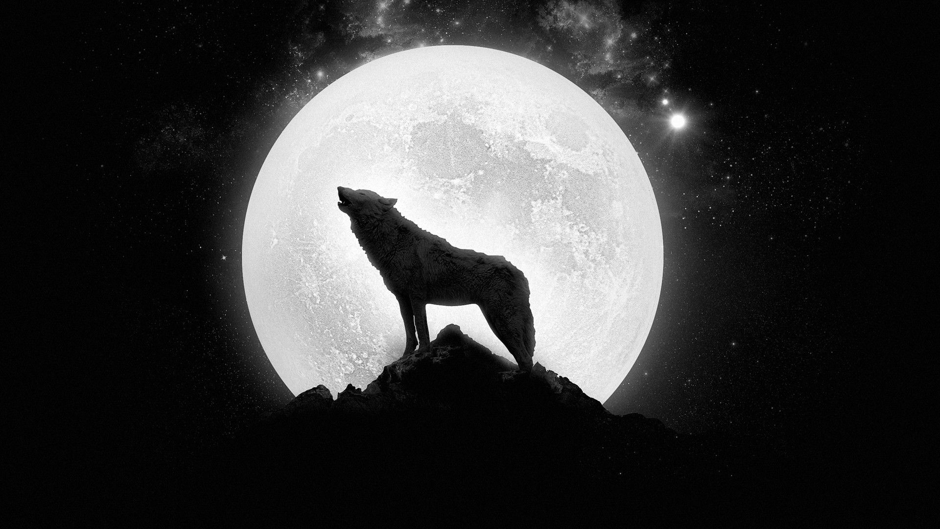 Dark Wolf Wallpapers 72 Background Pictures