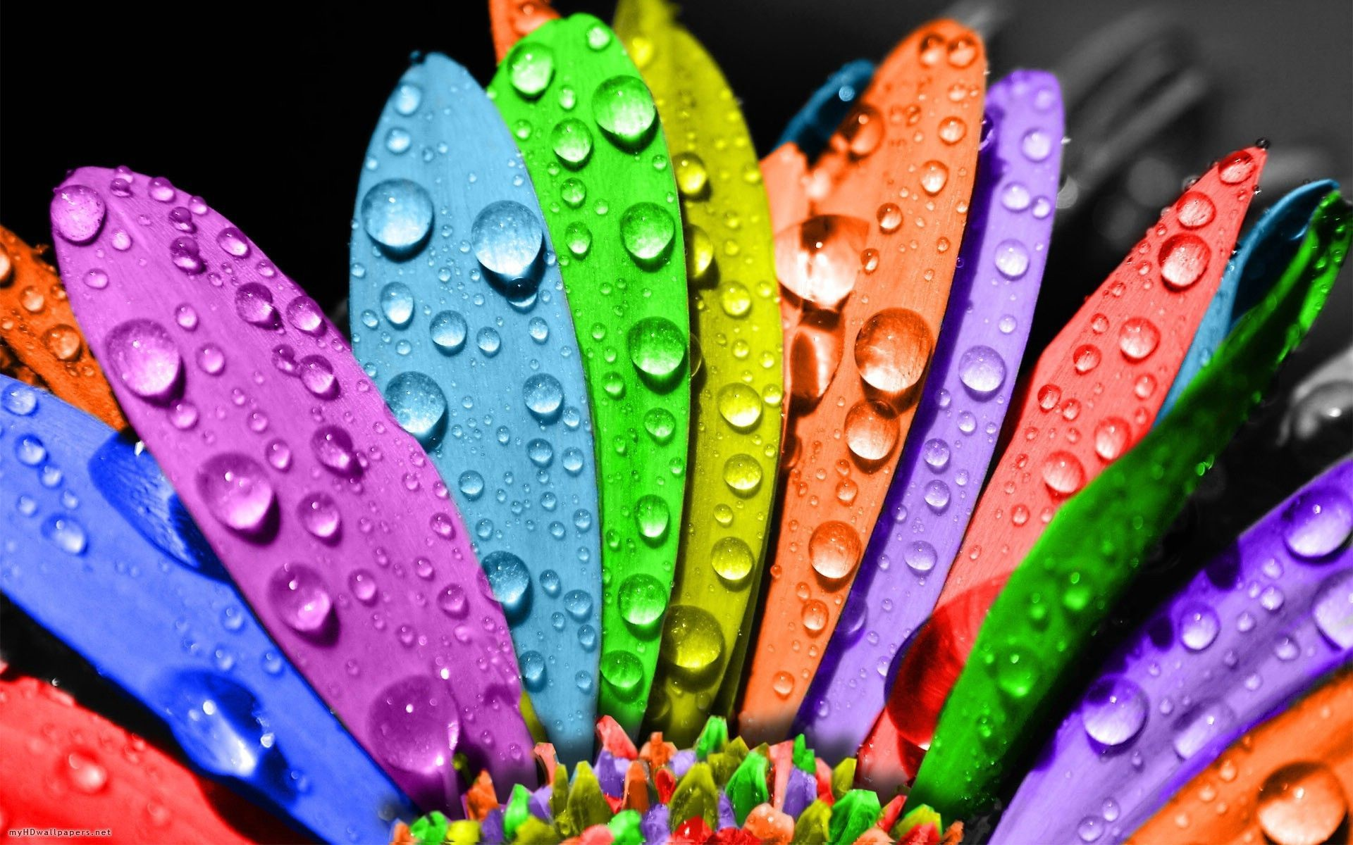 Hd Colorful Wallpapers 67 Background Pictures