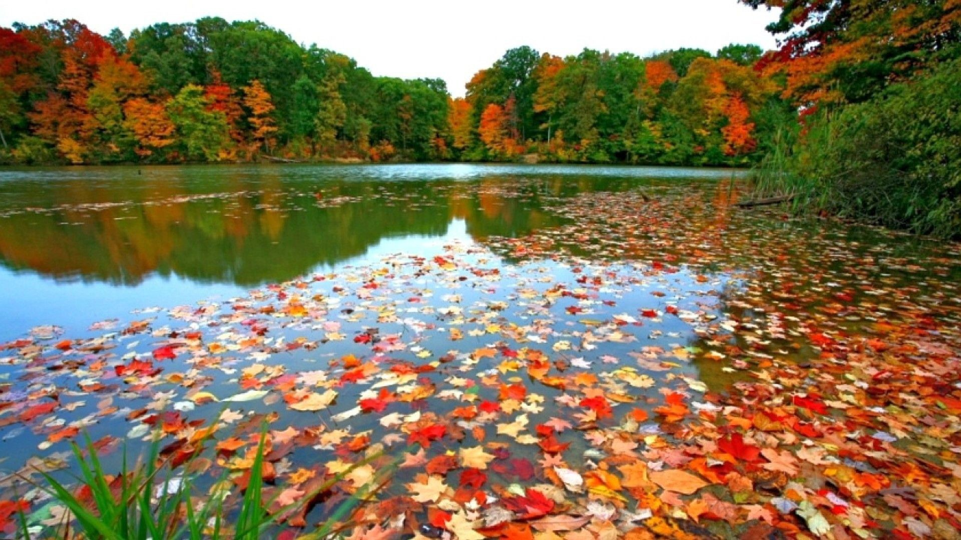 fall foliage desktop wallpapers (70+ background pictures)
