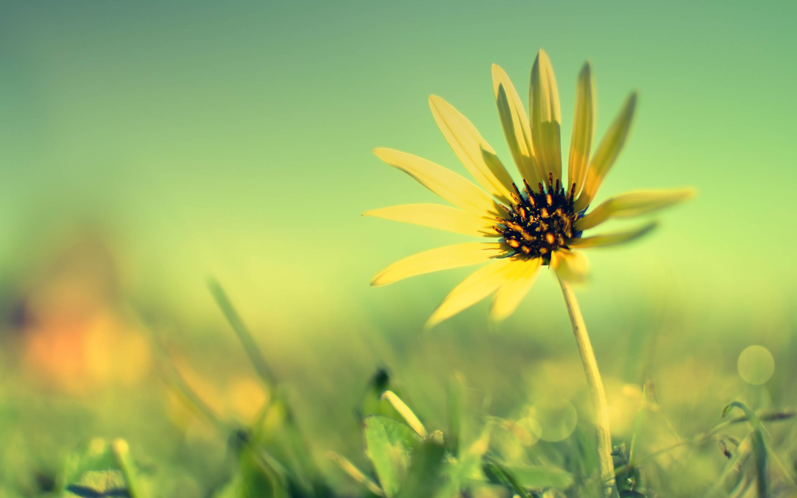 Single Flower Wallpapers 61 Background Pictures