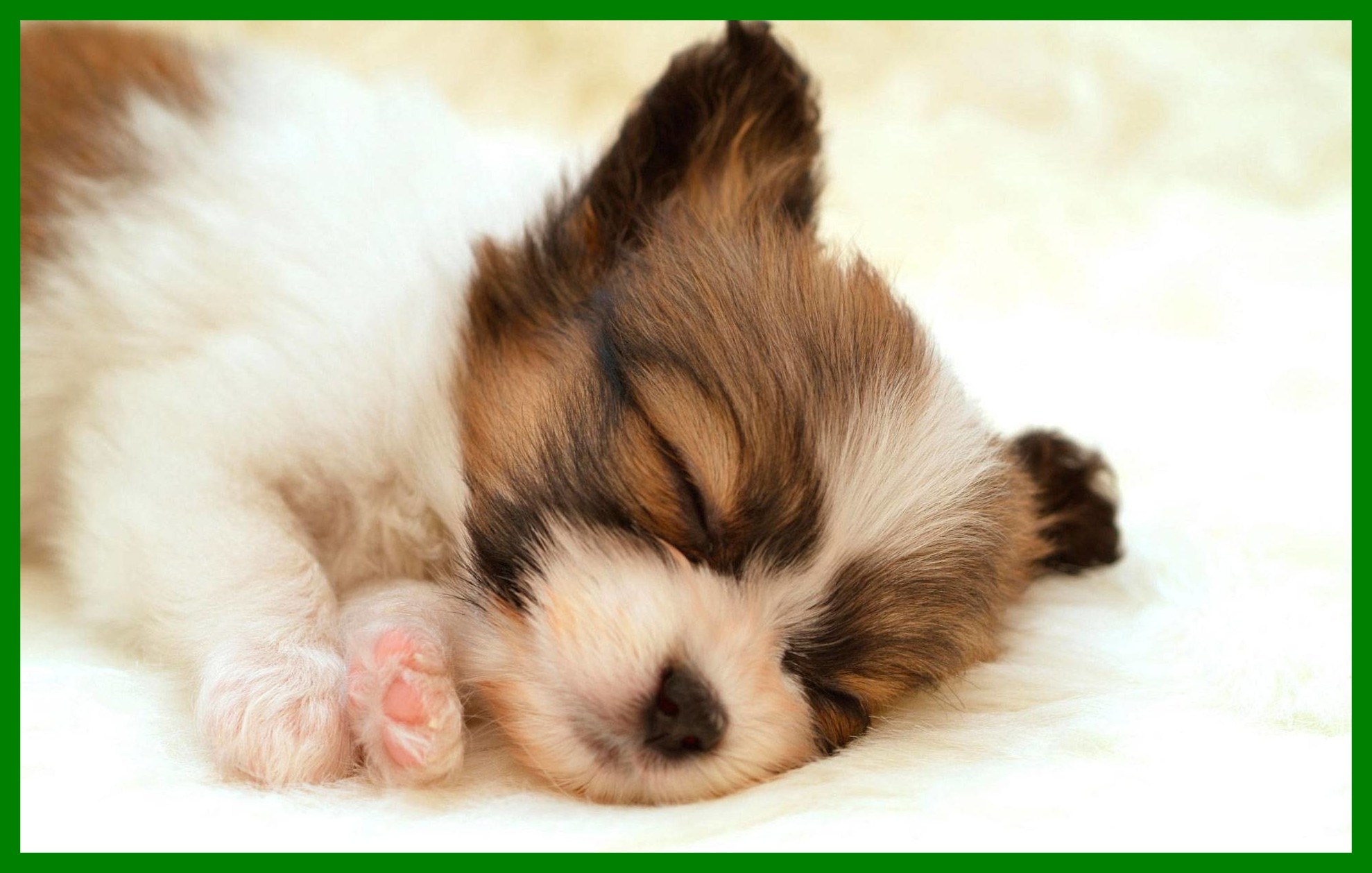 Cute Dogs and Puppies Wallpapers (65+ background pictures)