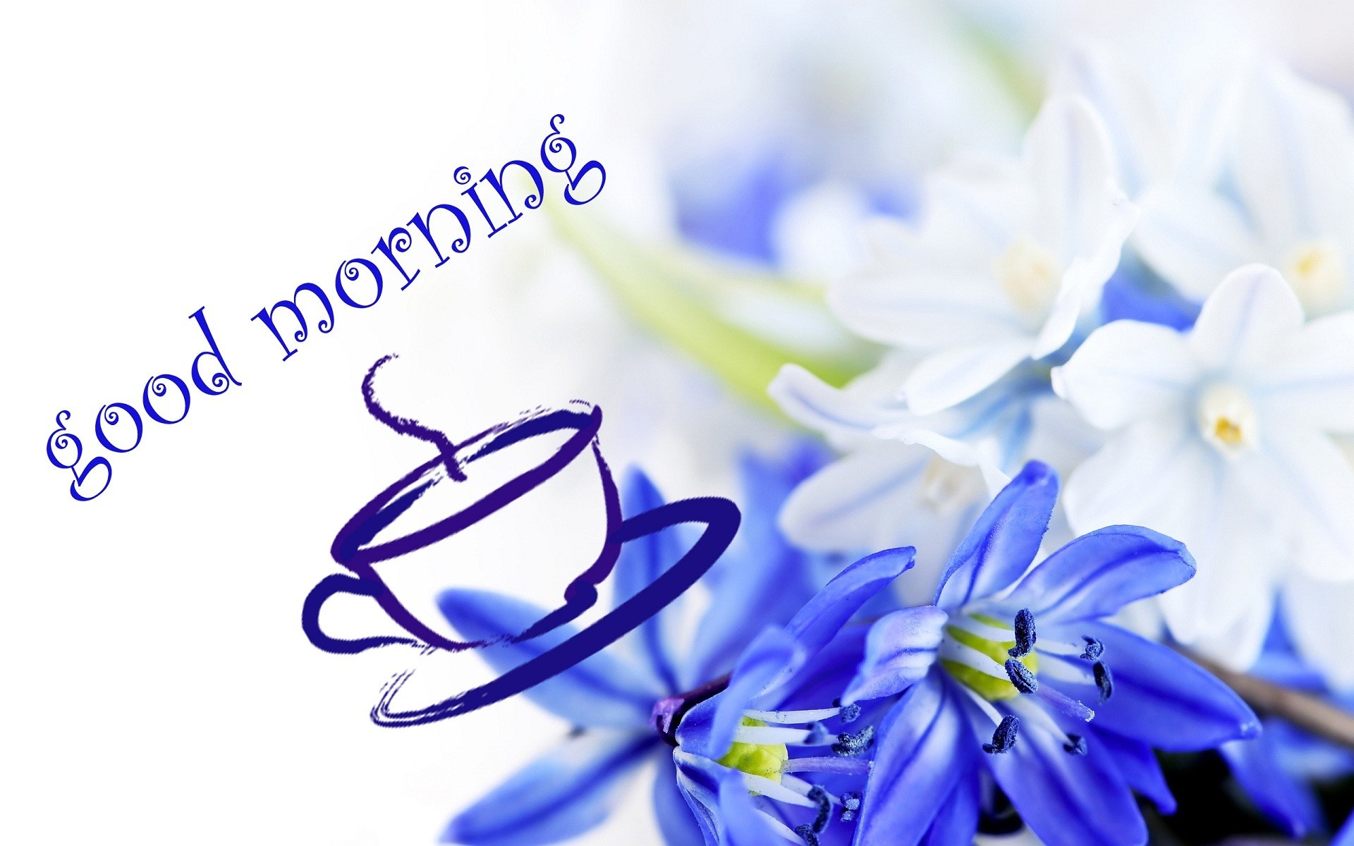 Blue flowers wallpapers 67 background pictures 1920x1200 blue flowers wallpaper izmirmasajfo