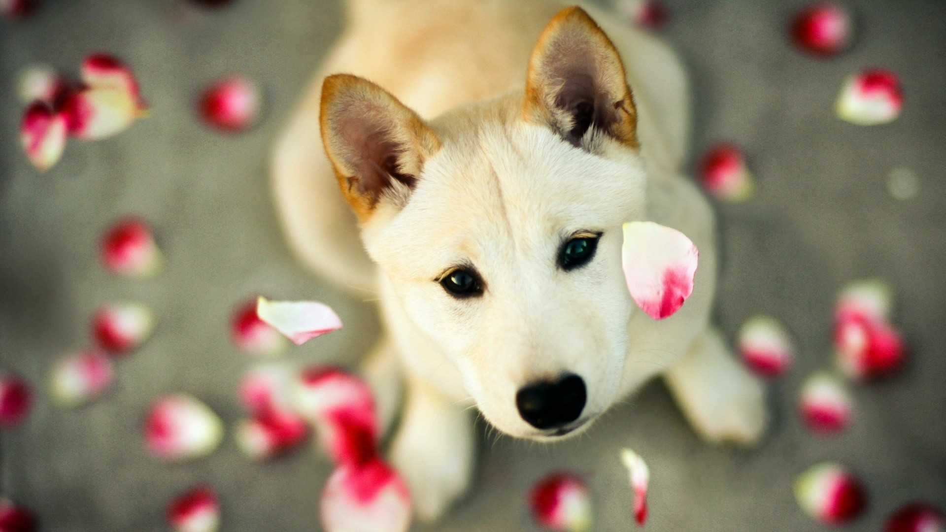 cute dog wallpapers (71+ background pictures)