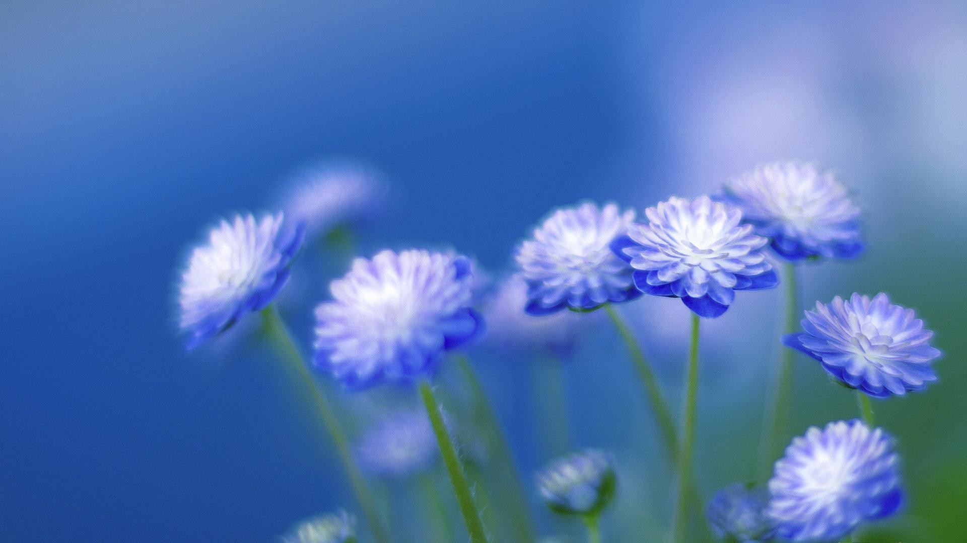 blue flowers wallpapers (67+ background pictures)