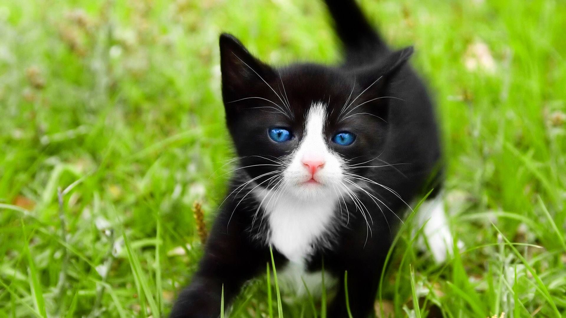 1920x1080 Cute Kitten Full HD Quality Wallpapers