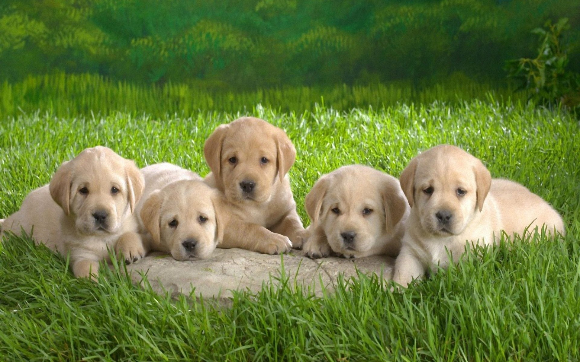 1080x1920 Puppies Wallpaper For Mobile Android | Best HD Wallpapers · Download