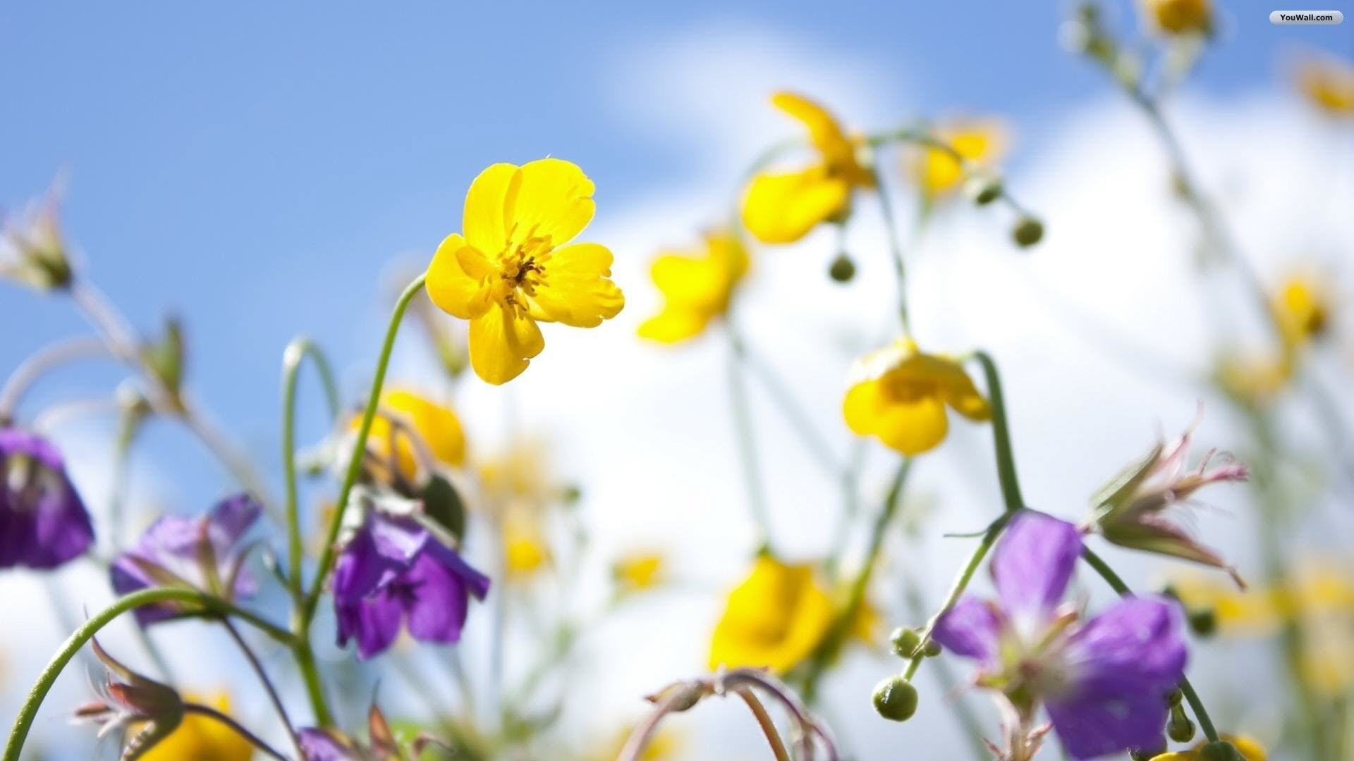 Spring flowers wallpapers 82 background pictures 2880x1800 timeline mightylinksfo
