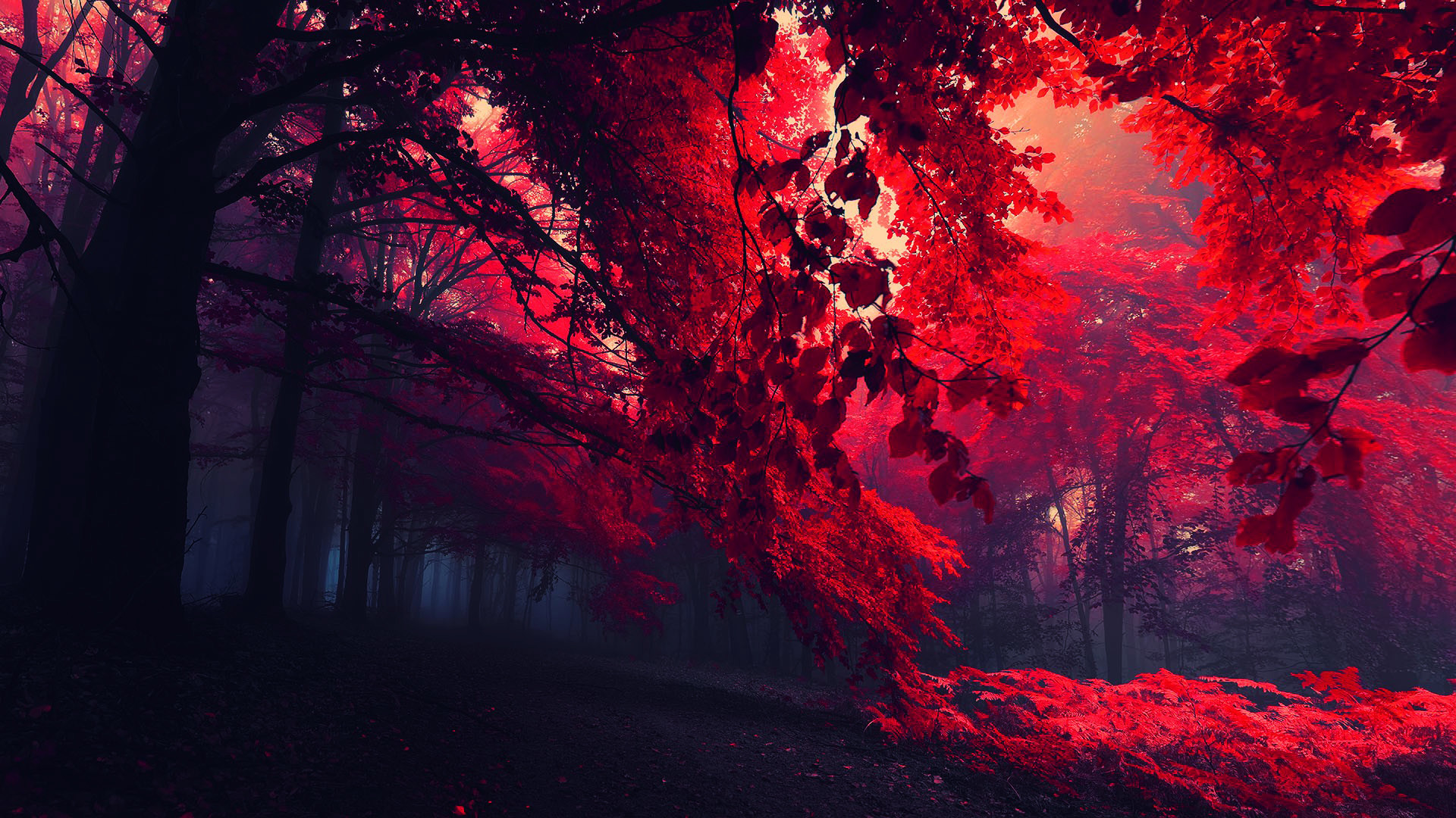 Deep Red Wallpapers 64 Background Pictures