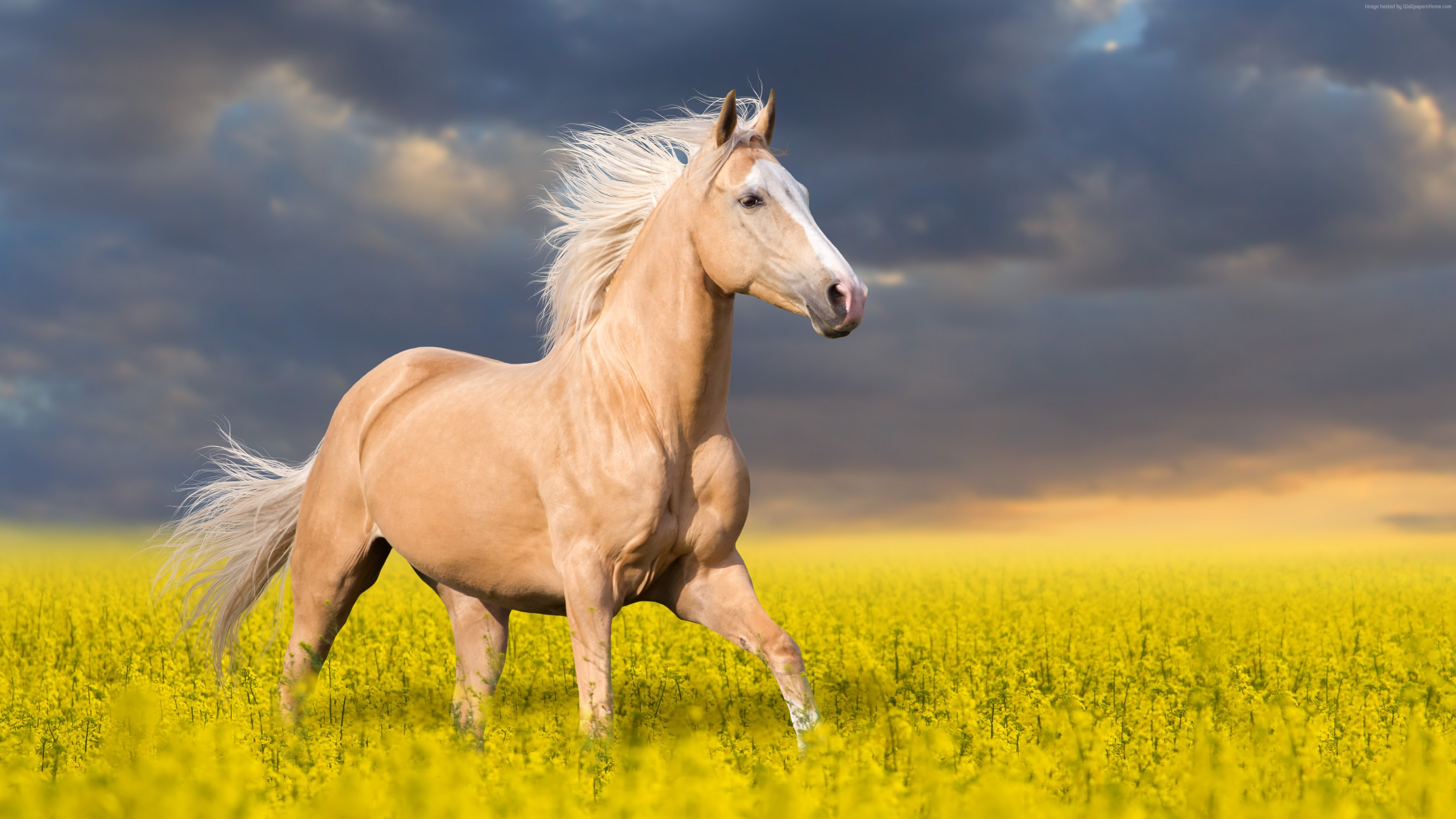 horse cute wallpapers animals 4k resolution background 5k