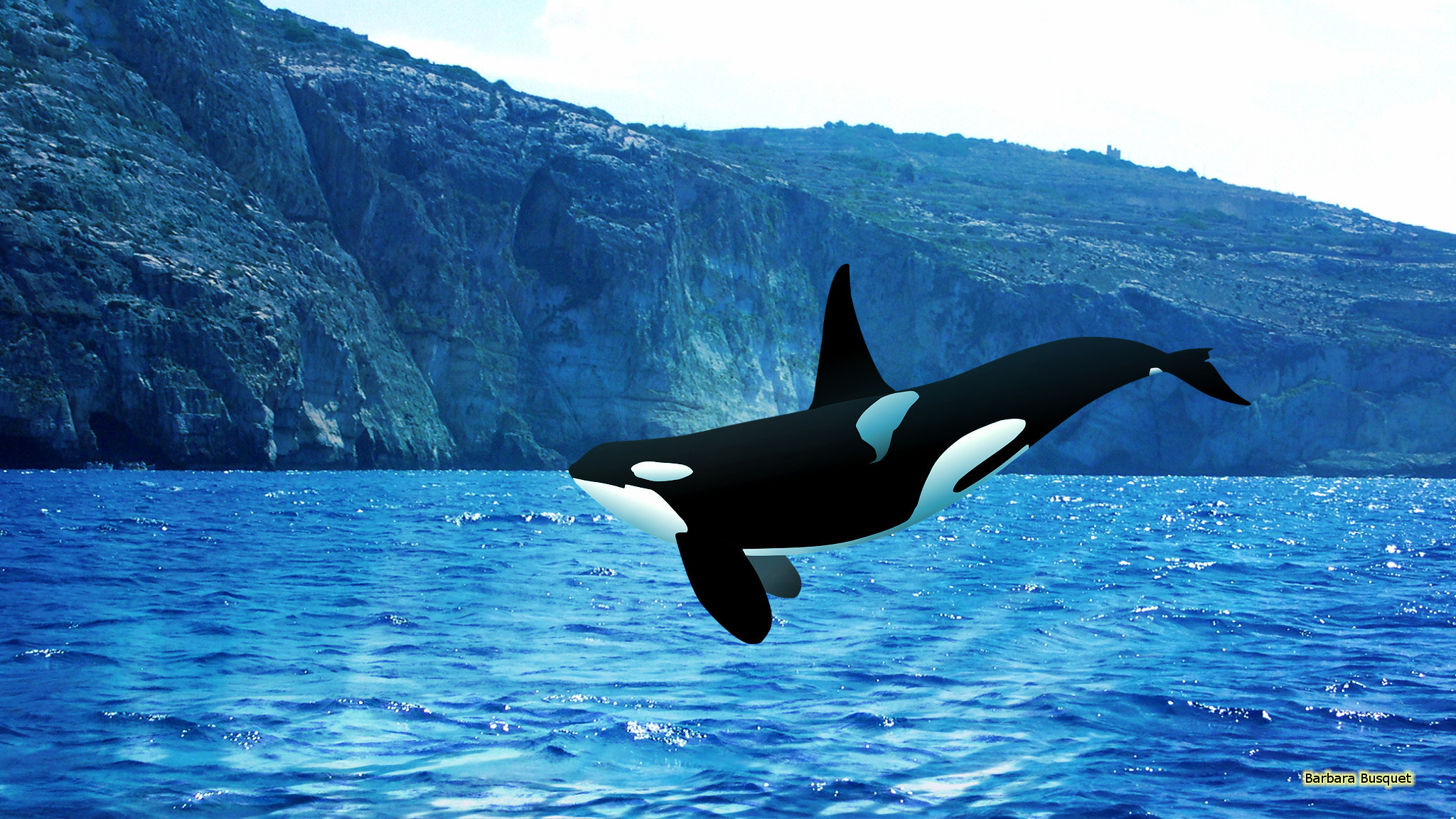 Orca wallpapers 50 background pictures 2048x1152 orca wallpapers 4 2048 x 1152 altavistaventures Images