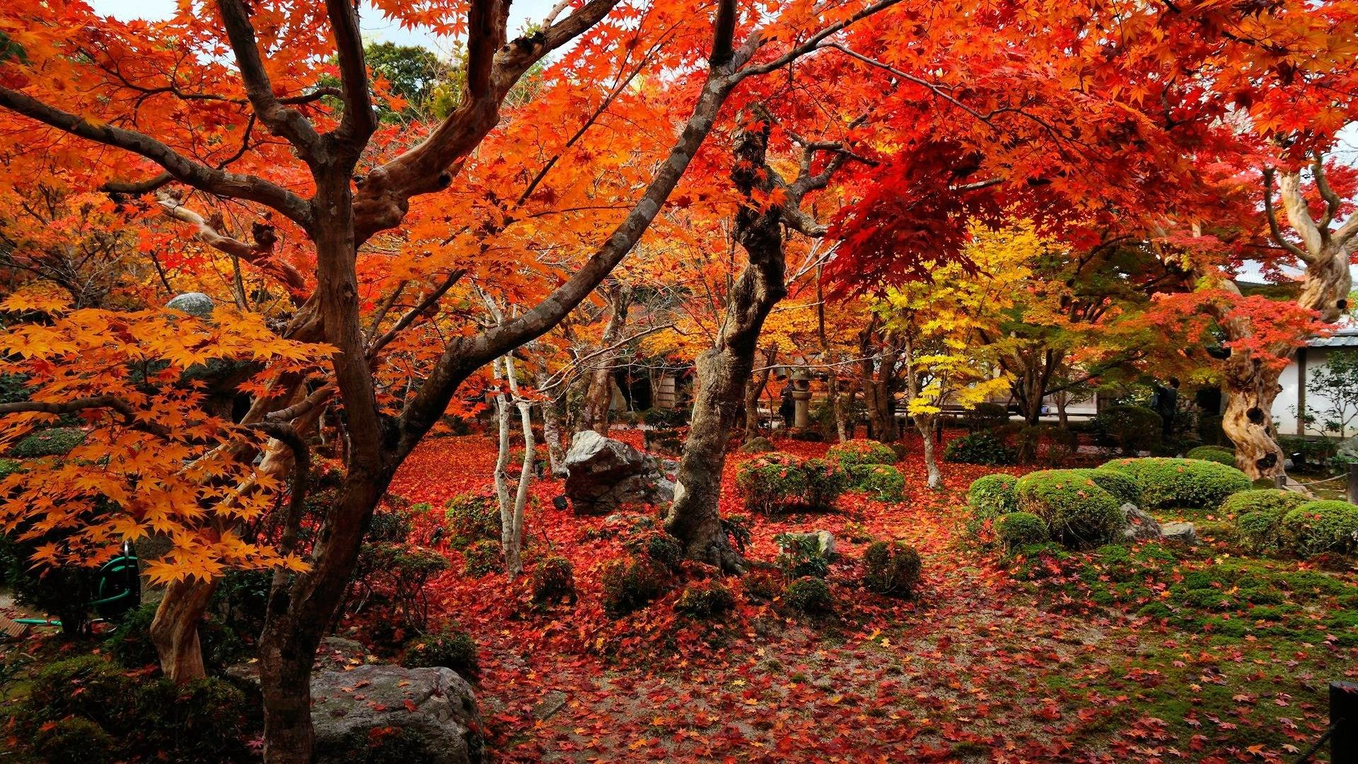 Fall Foliage Desktop Wallpapers 70 Background Pictures