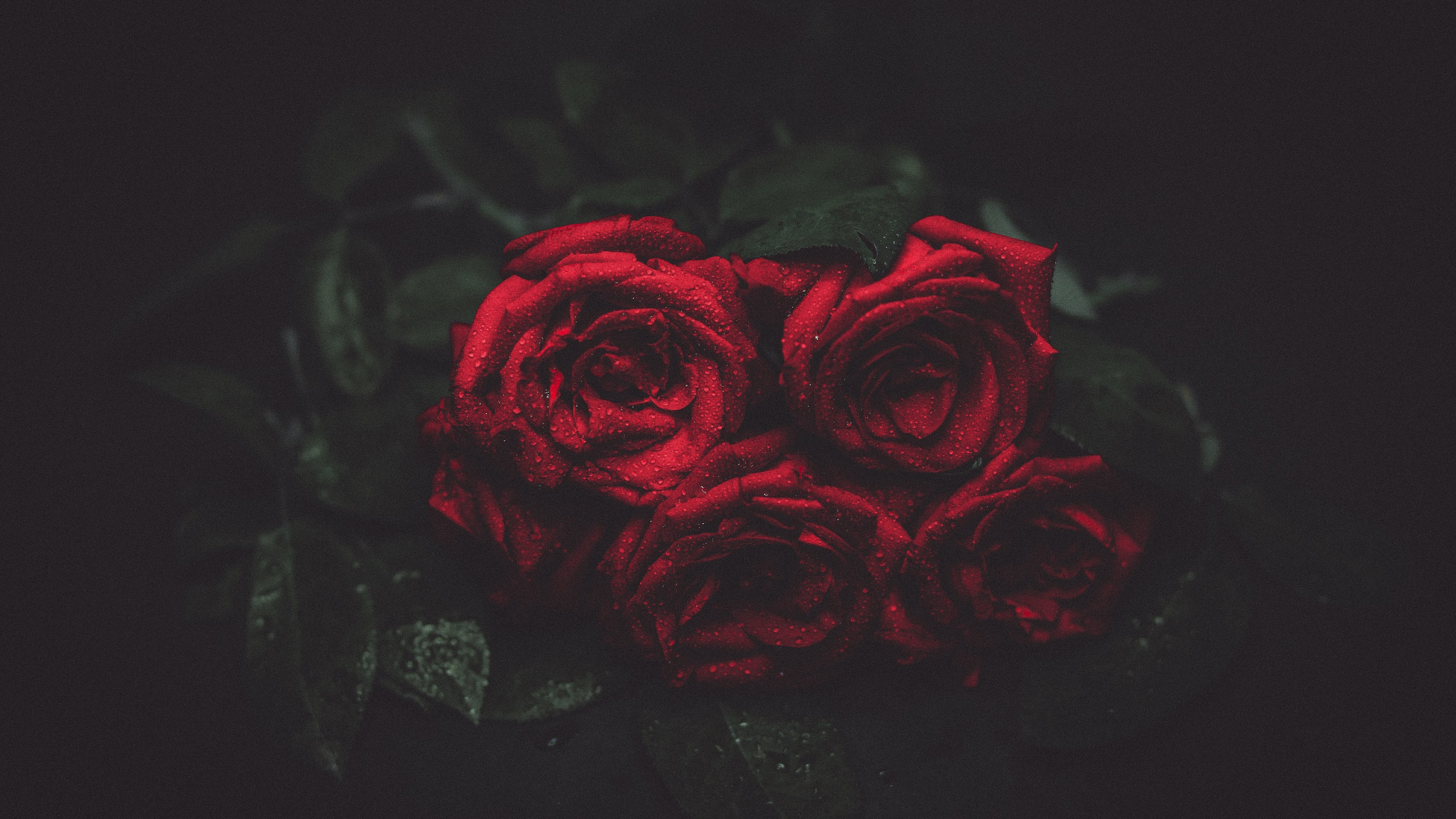Red Rose Wallpapers Images 59 Background Pictures