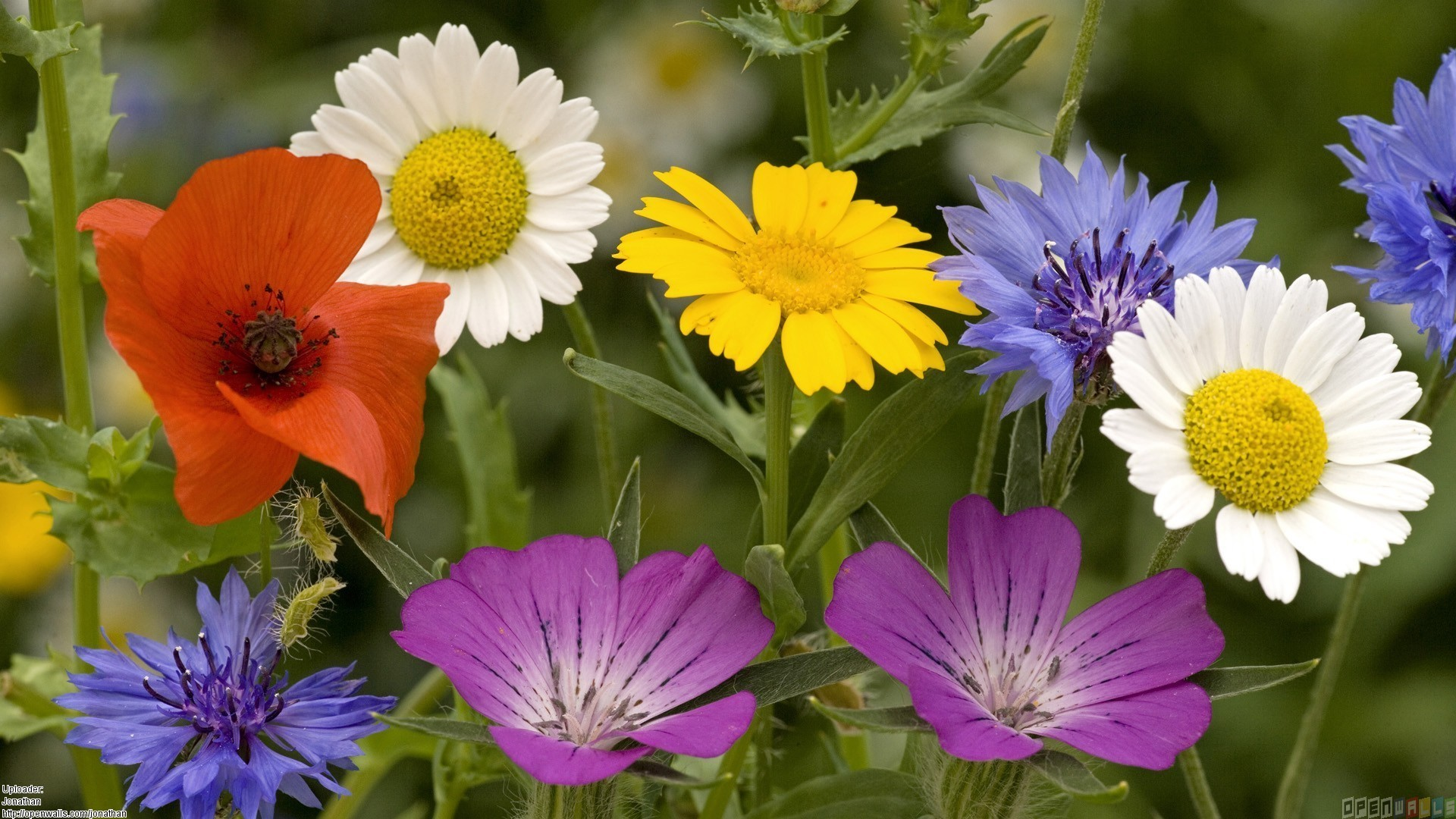 Wallpapers Summer Flowers 75 Background Pictures