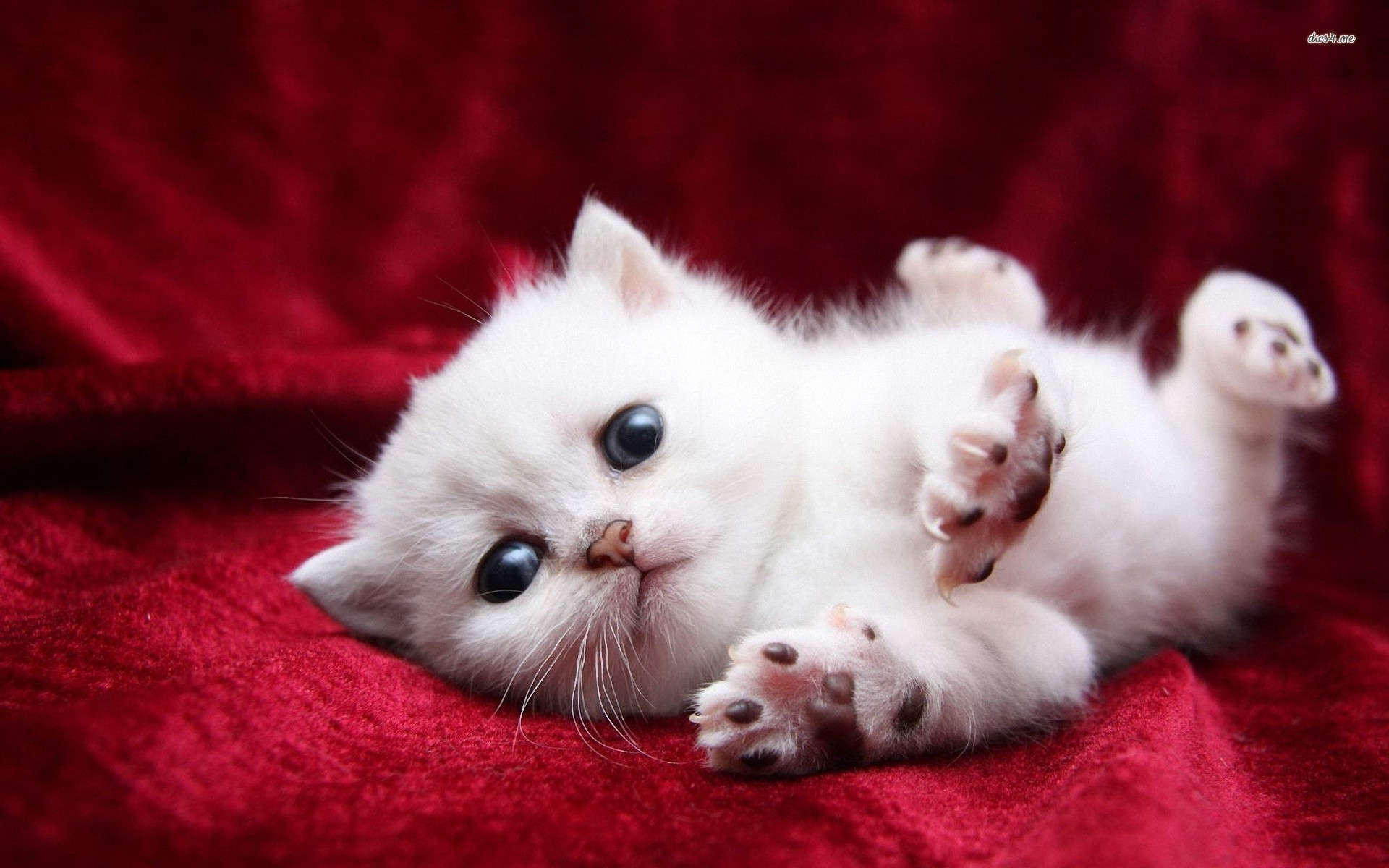 Funny kittens wallpapers 68 background pictures 1920x1080 very cute kittens wallpaper 9699 full hd wallpaper desktop res altavistaventures Choice Image