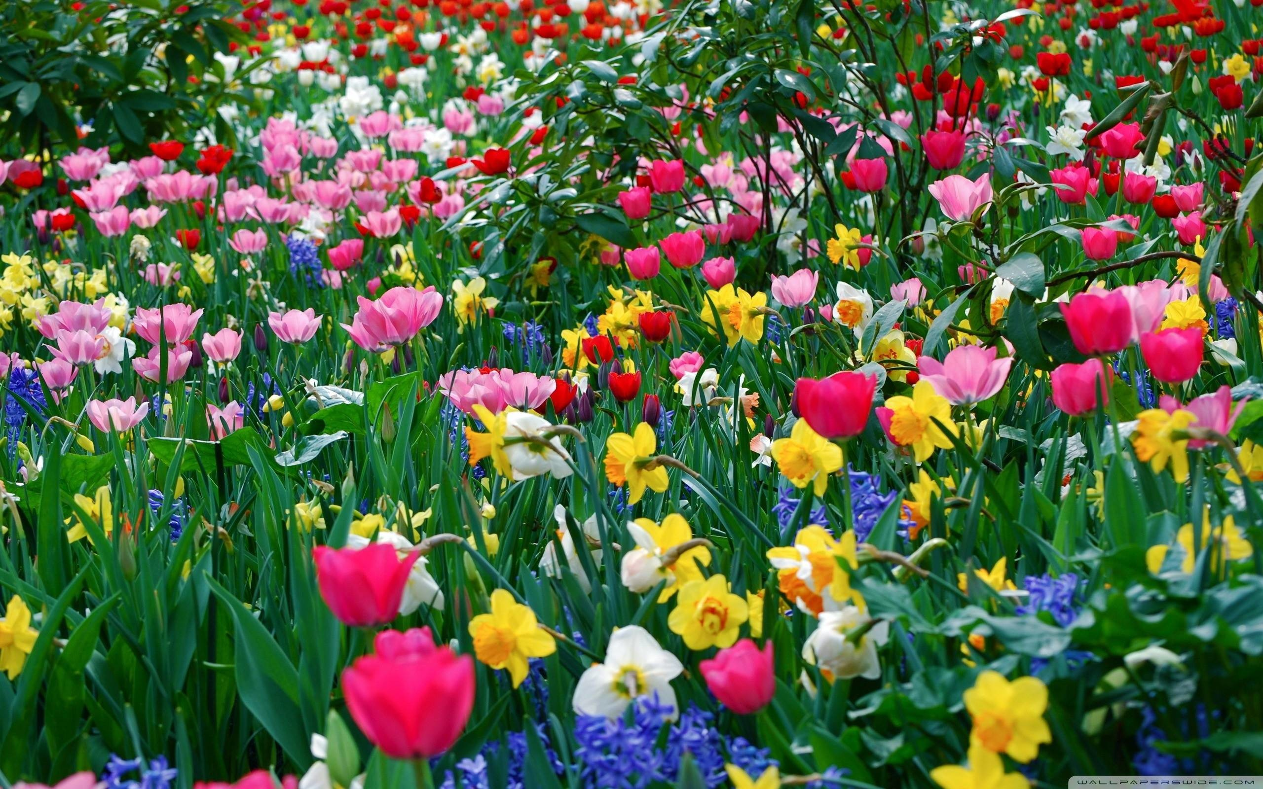 Spring flowers wallpapers 82 background pictures 2560x1600 spring flowers wallpapers pictures mightylinksfo
