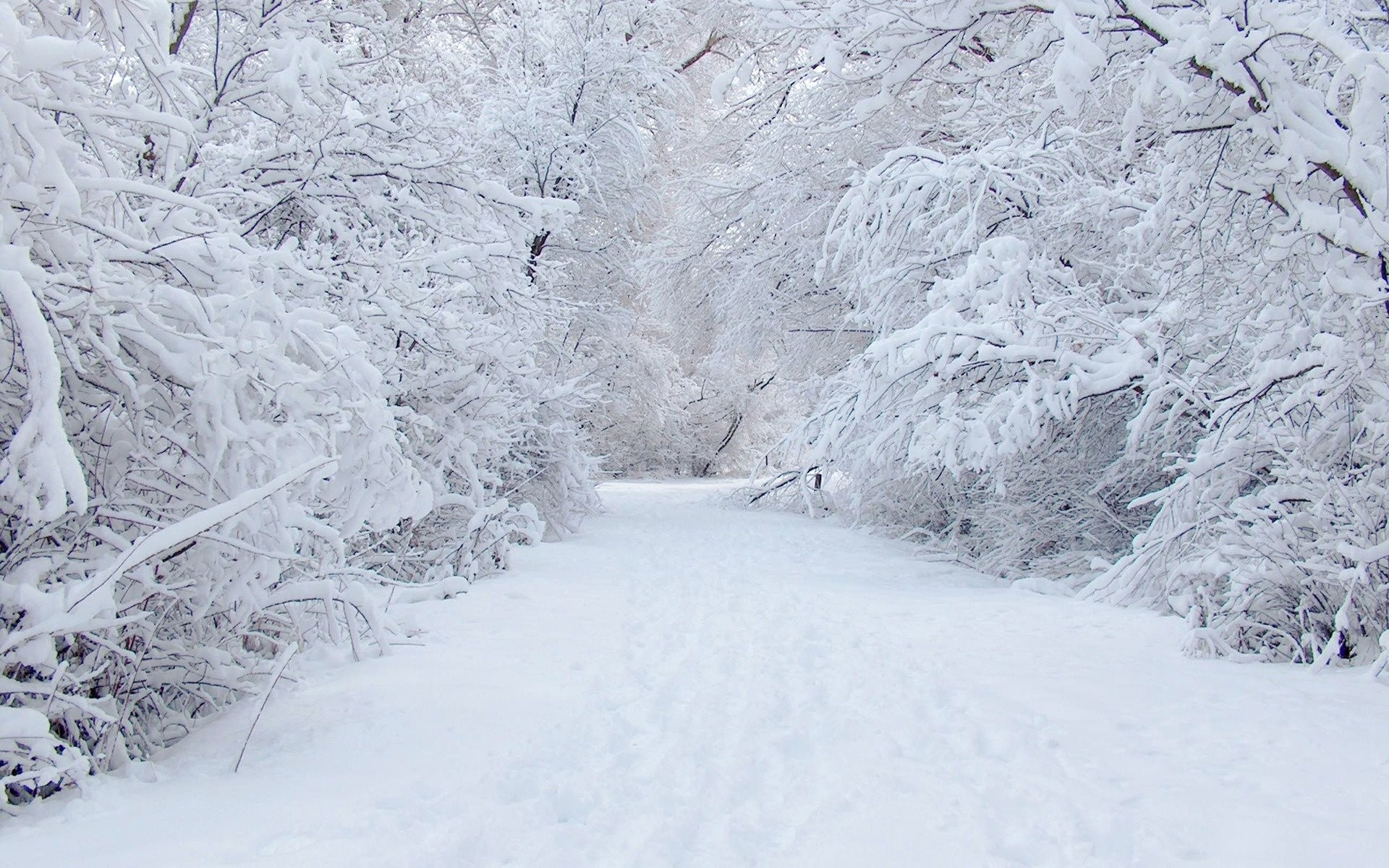Wallpapers Snow 67 Background Pictures