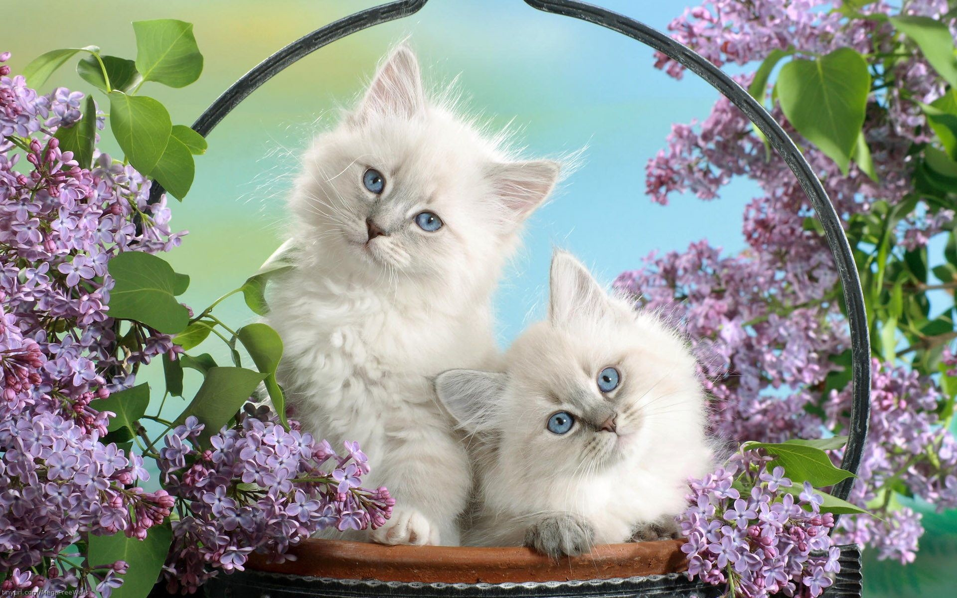 Cute kitty wallpapers 67 background pictures 1920x1080 kitten wallpapers background thecheapjerseys Gallery