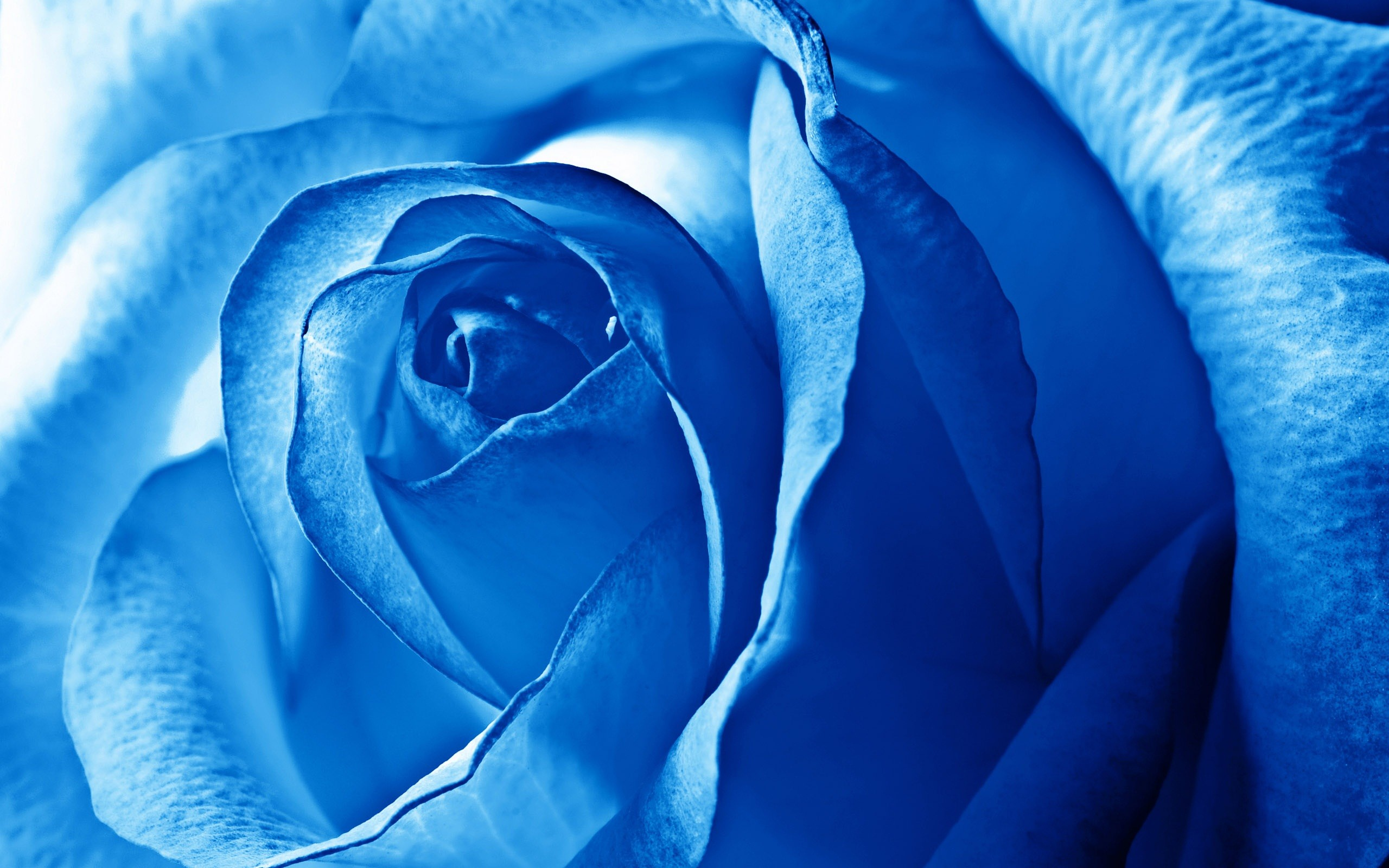 Blue flowers wallpapers 67 background pictures 1080x1920 beautiful blue flowers iphone wallpaper izmirmasajfo