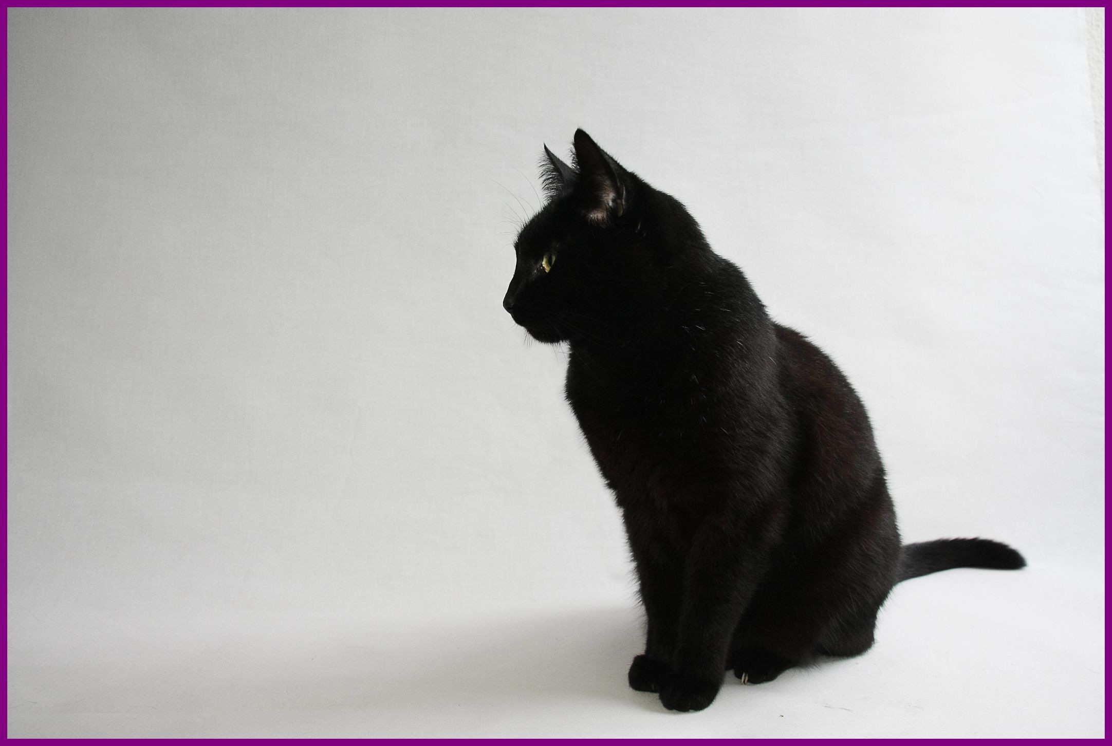 Black And White Cat Wallpapers 70 Background Pictures