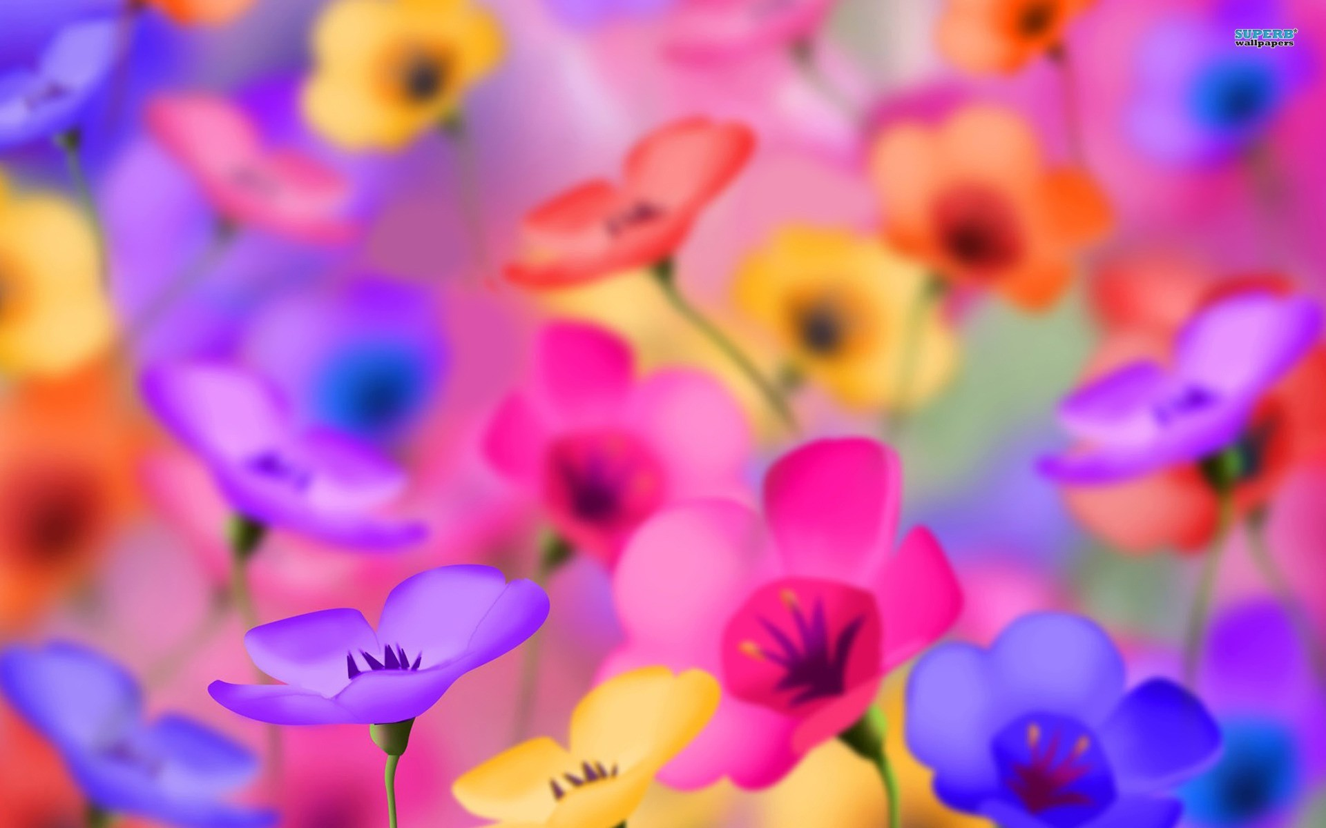 Colorful Flower Wallpapers 74 Background Pictures