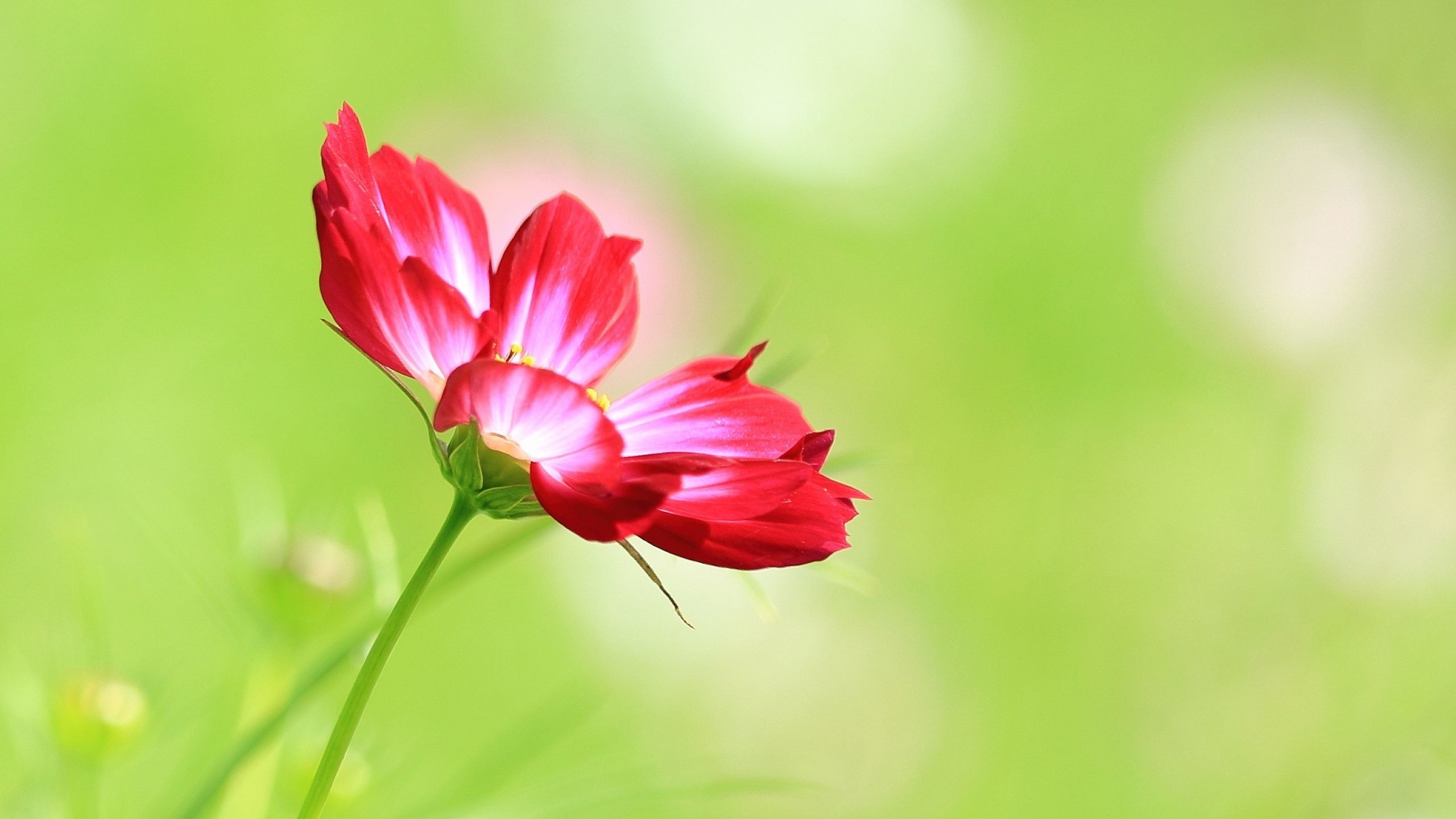 Single Flower Wallpapers (61+ background pictures)