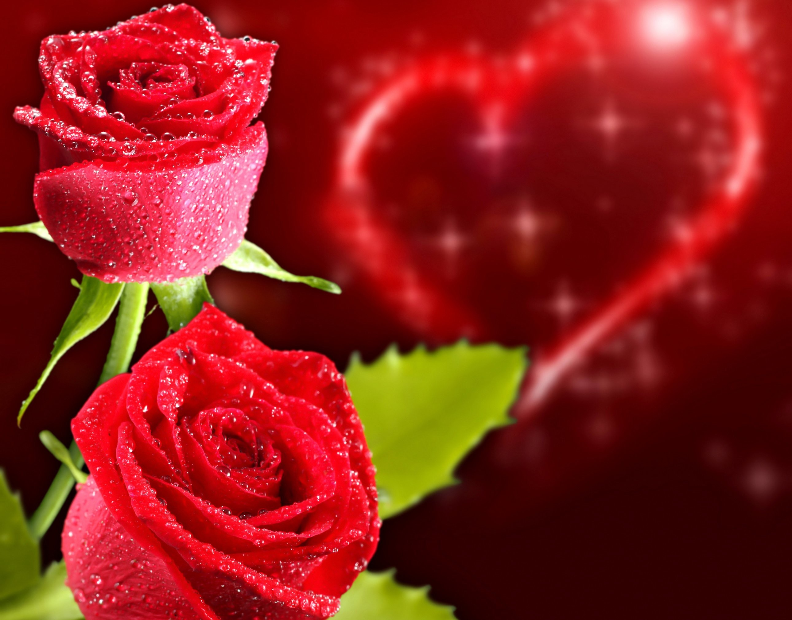 2560x1600 Rare Picture Of Hearts And Flowers Wallpaper For Love Heart Images Hd Pics Androids