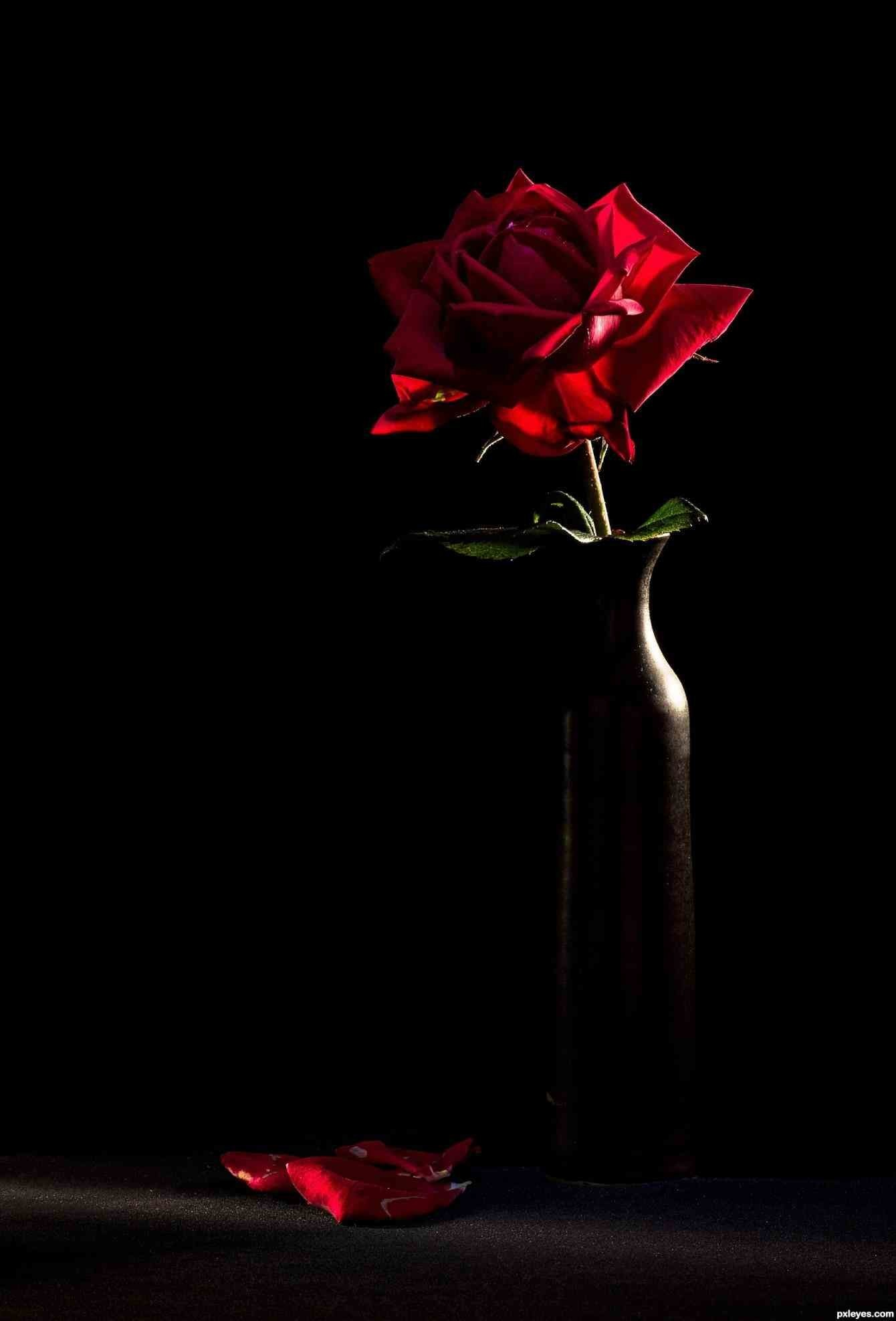 Red Rose Wallpapers 67 Background Pictures