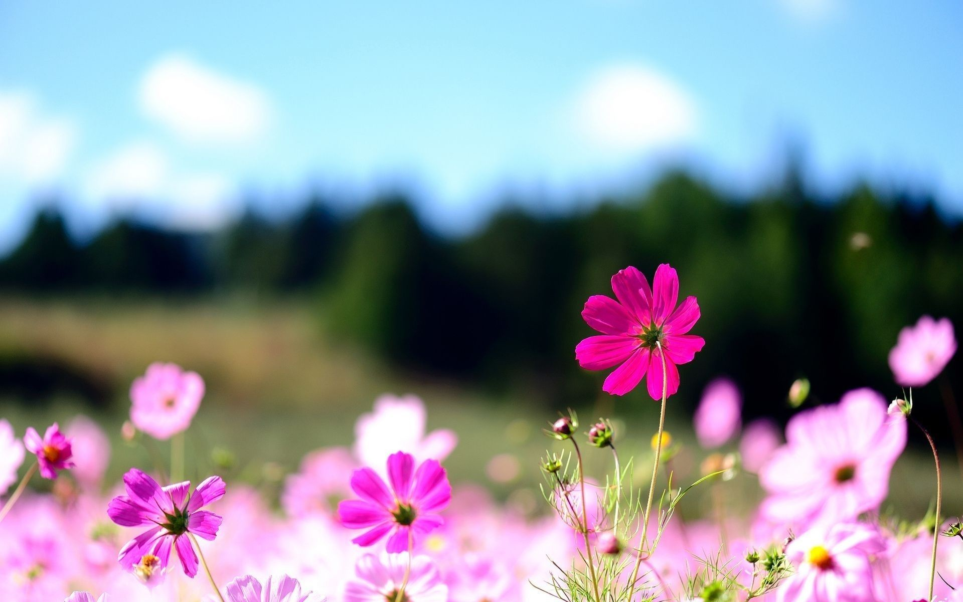 Desktop Wallpapers Flowers 73 Background Pictures