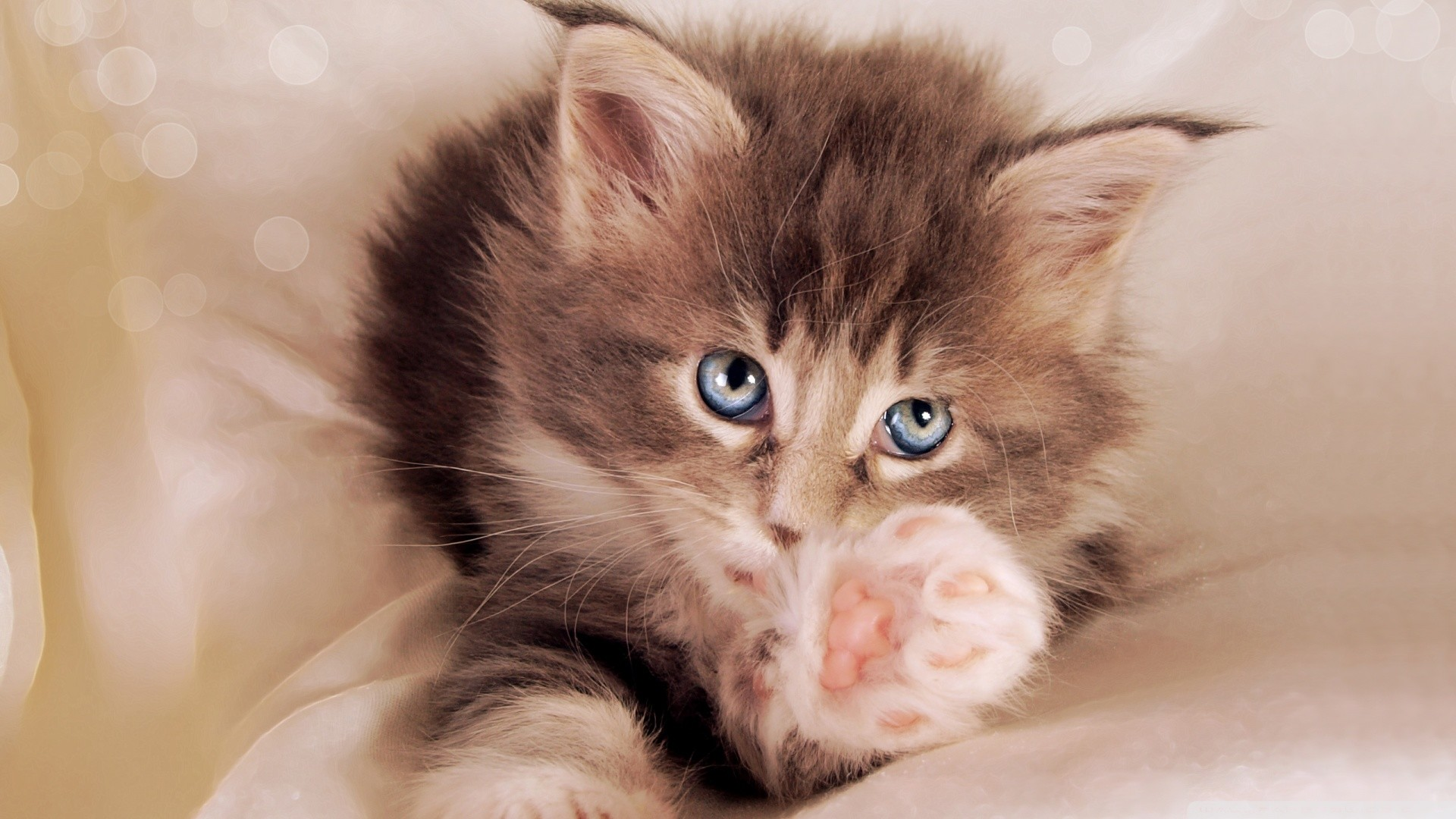 Kitty Cat Wallpapers 70 Background Pictures