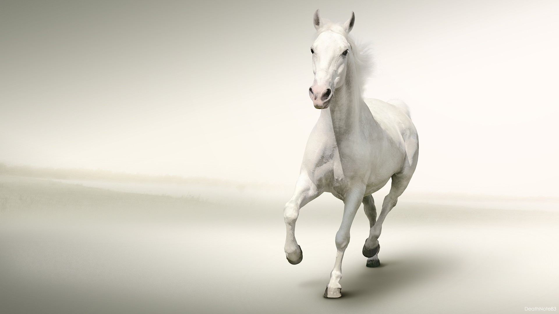 Horse Wallpapers 61 Background Pictures