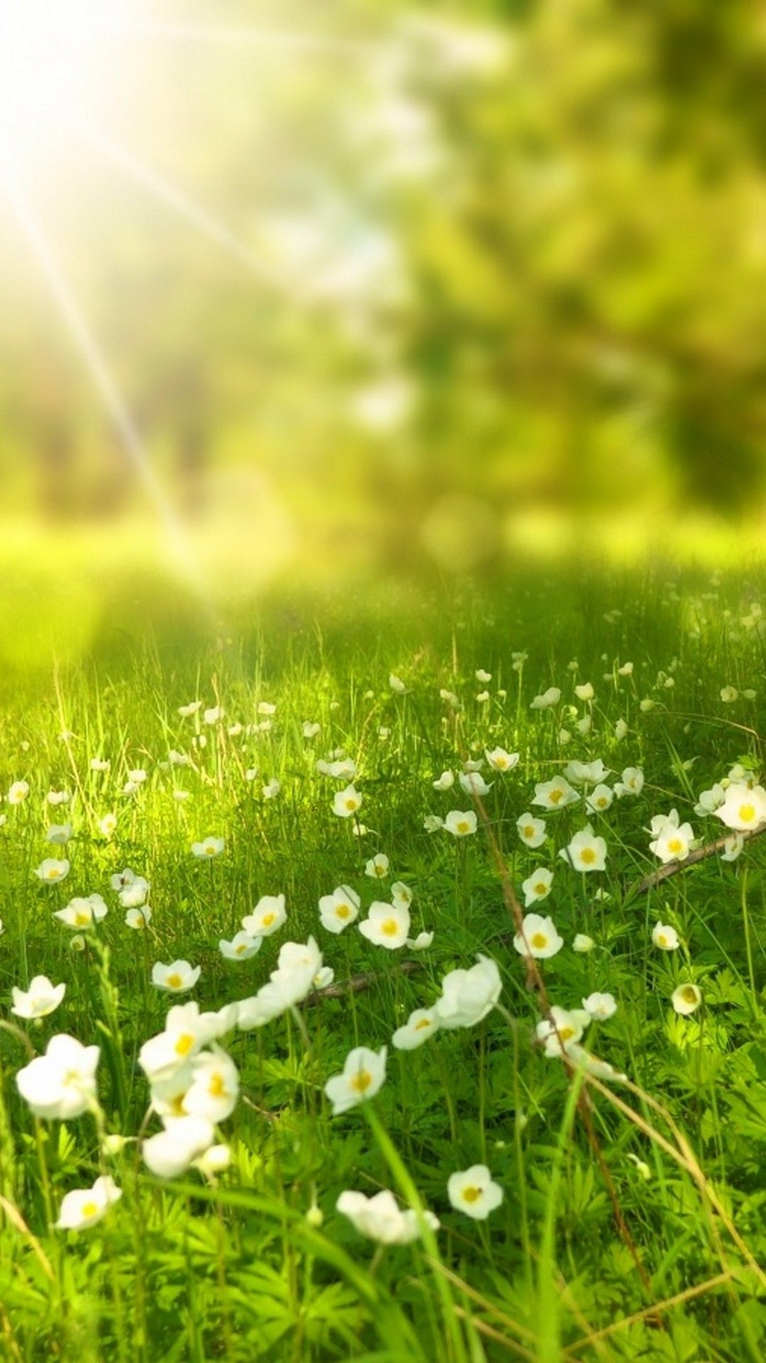 1920x1200 Green Grass Spring Season Wallpaper Hd Free