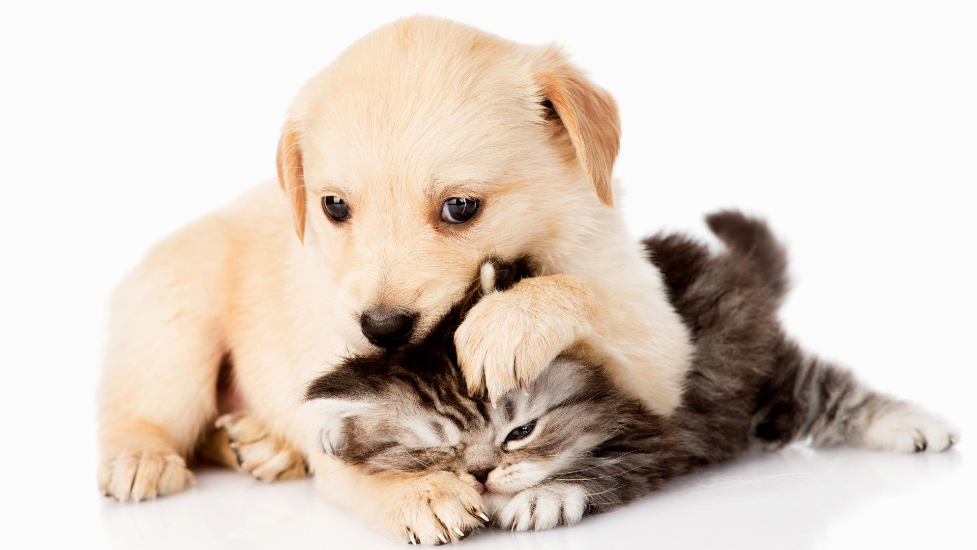 Puppies and kittens wallpapers 62 background pictures 1920x1080 cute puppy and kitten wallpaper thecheapjerseys Choice Image
