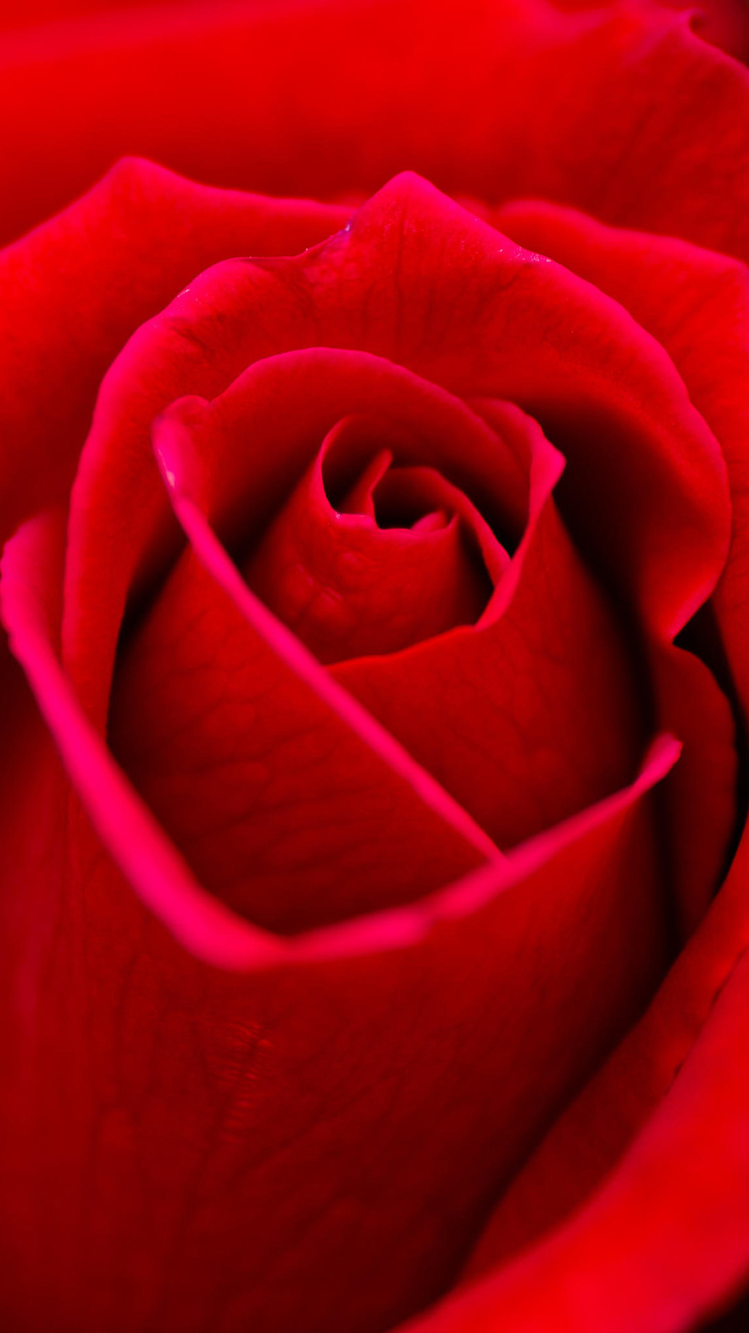 Red roses wallpapers 62 background pictures 2560x1600 red roses flowers wallpaper red rose wallpapers free download izmirmasajfo