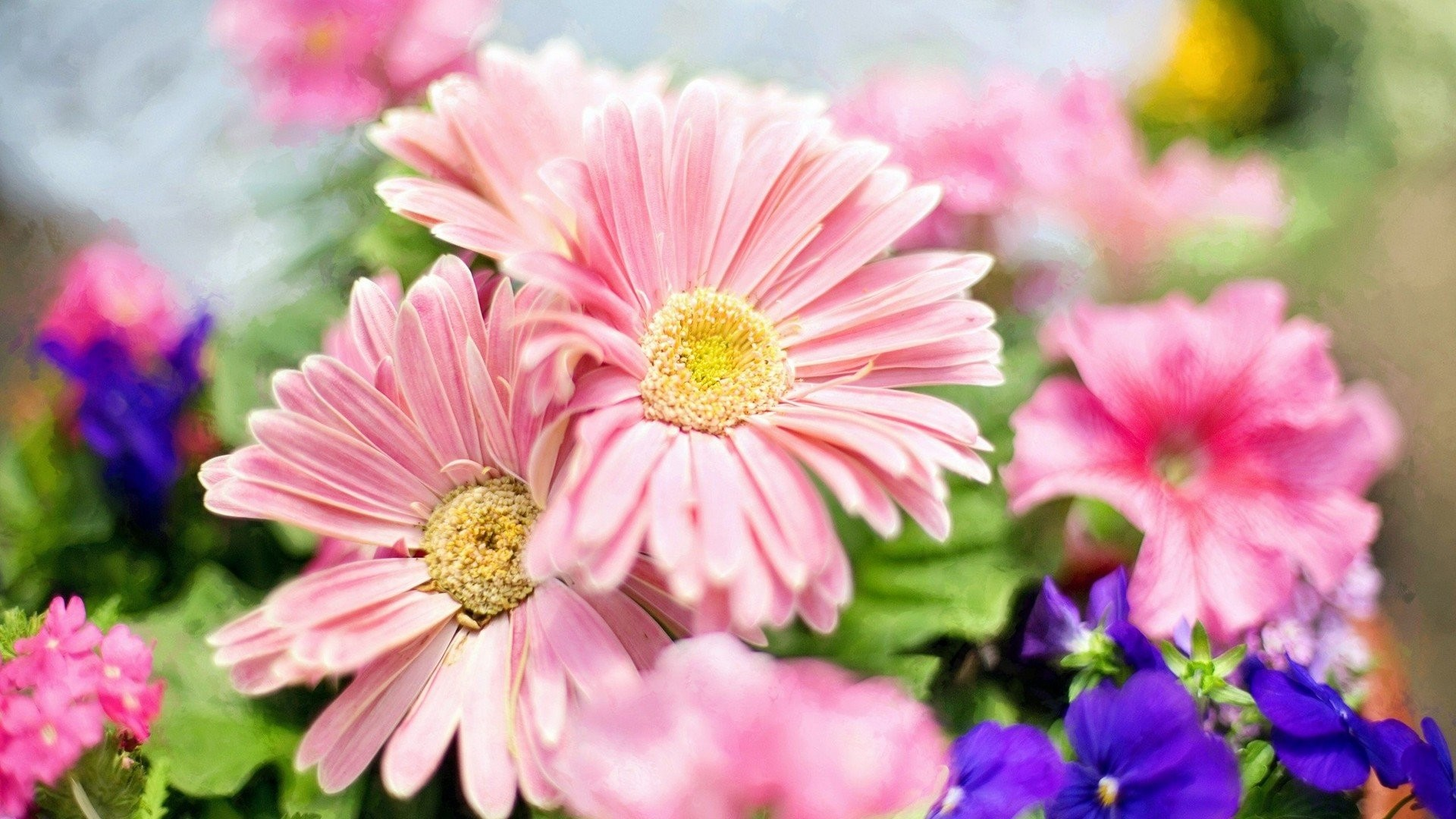 Pink Flower Desktop Wallpapers 69 Background Pictures