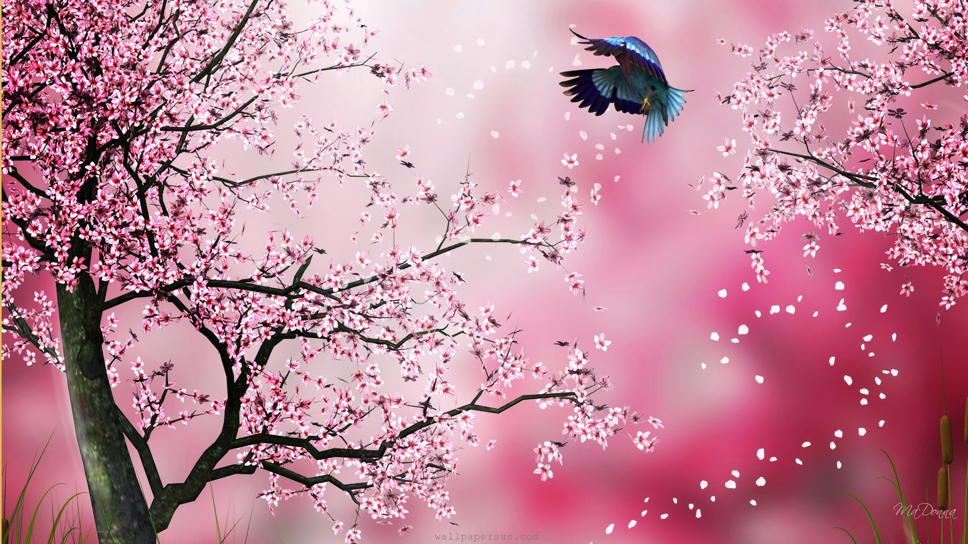 Download x wallpaper cherry blossoms flowers blur tree