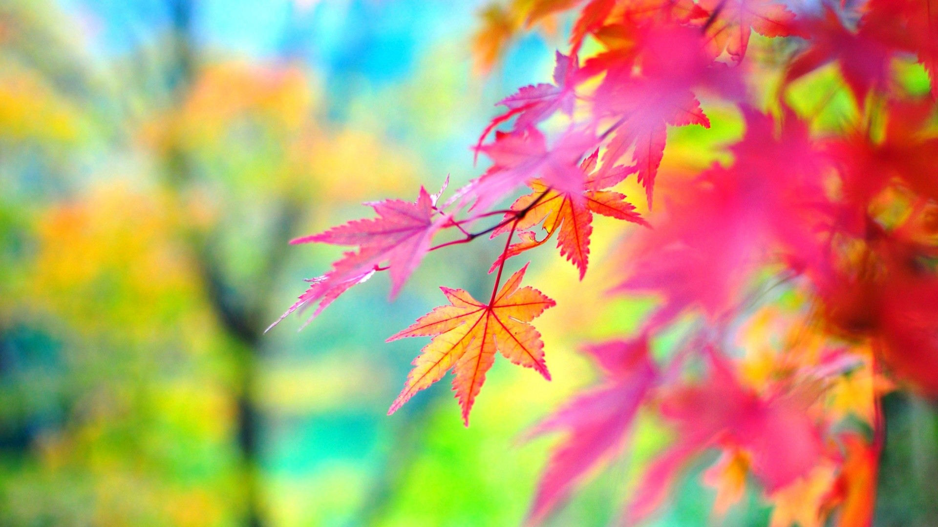 Picture Foliage Red Nature Autumn x