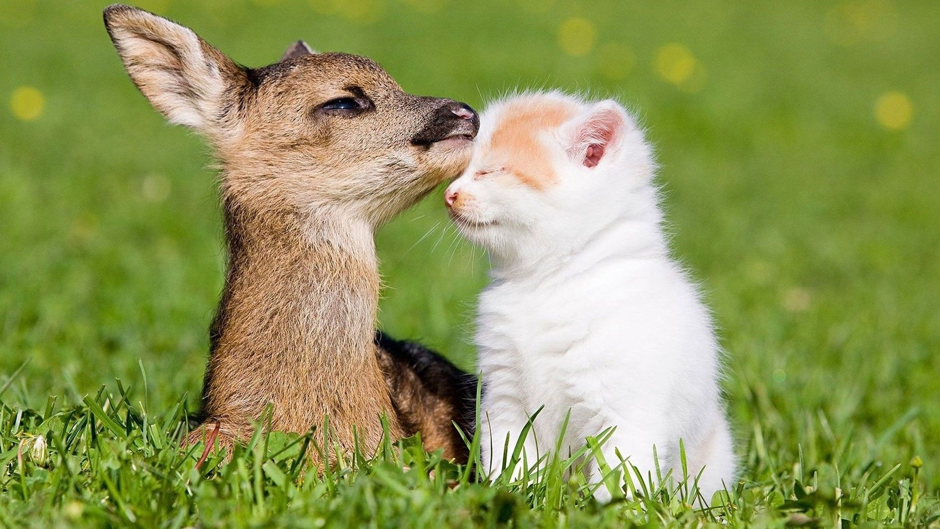 Cute Baby Animal Wallpapers (72+ background pictures)