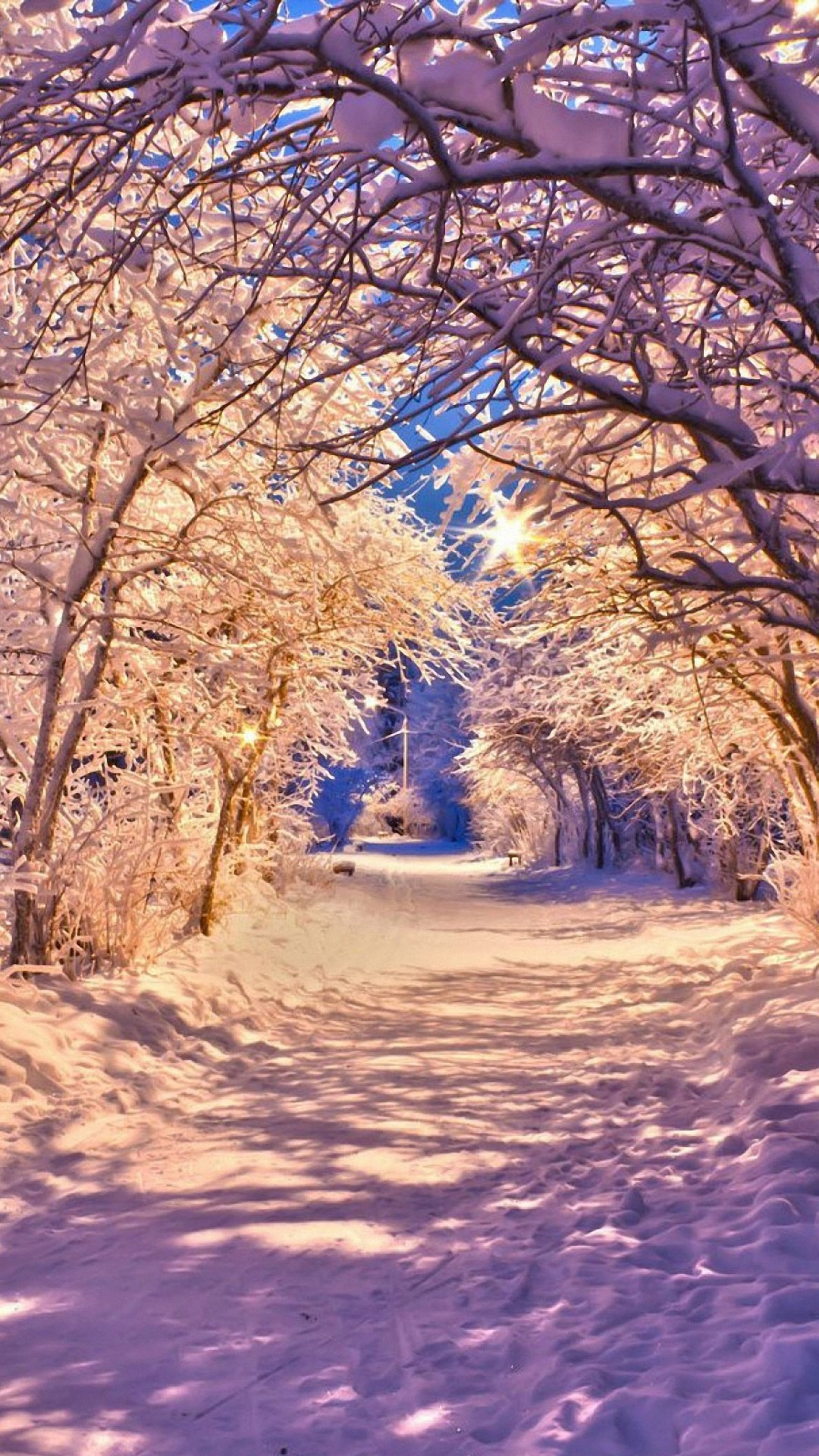 Winter Tree Wallpapers 79 Background Pictures