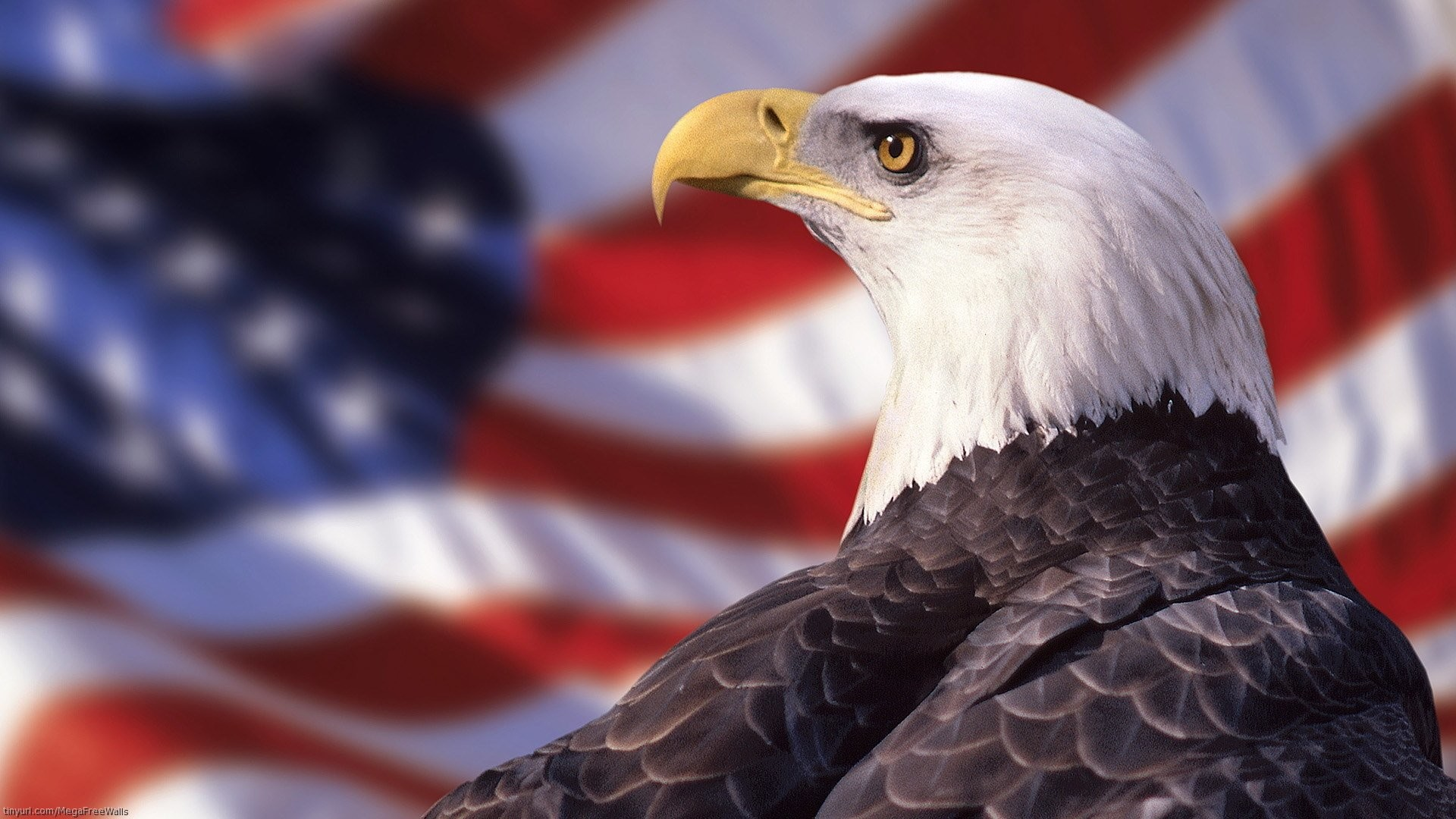 bald eagle wallpapers (70+ background pictures)