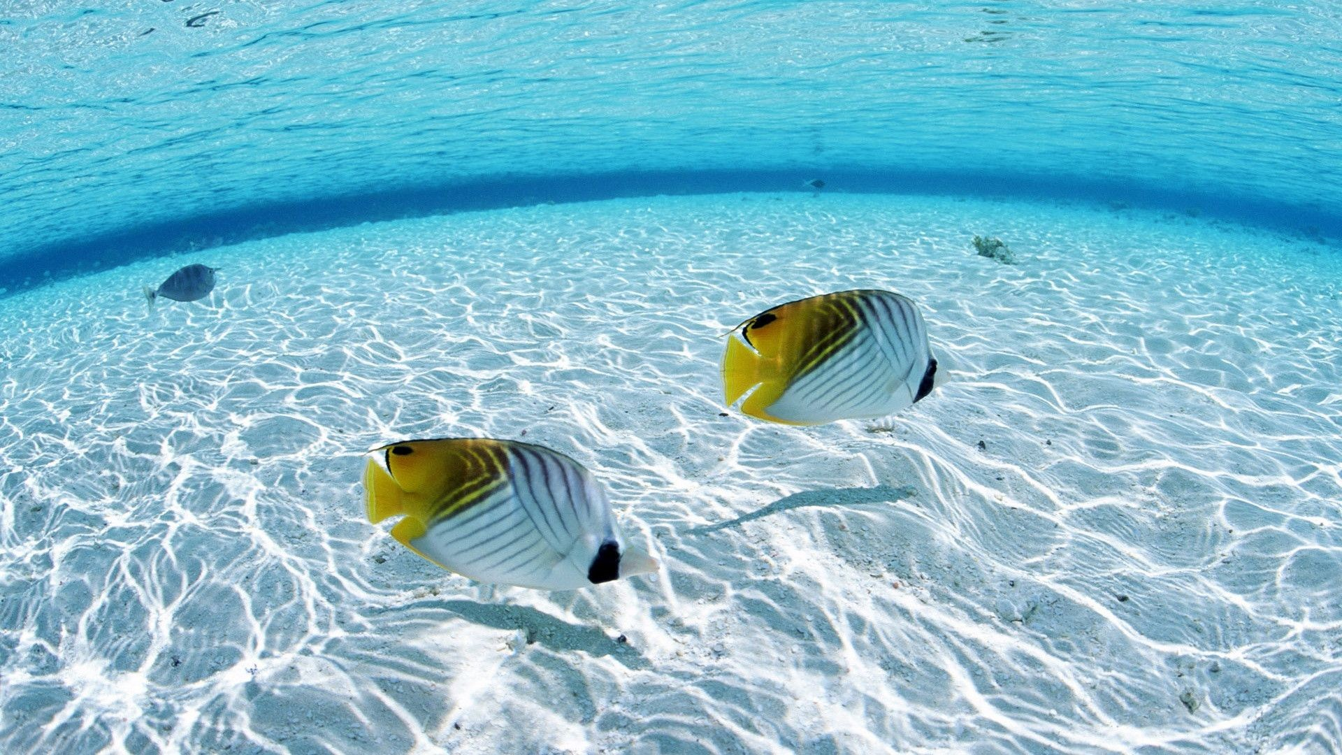 Tropical Wallpapers Backgrounds 70 Background Pictures