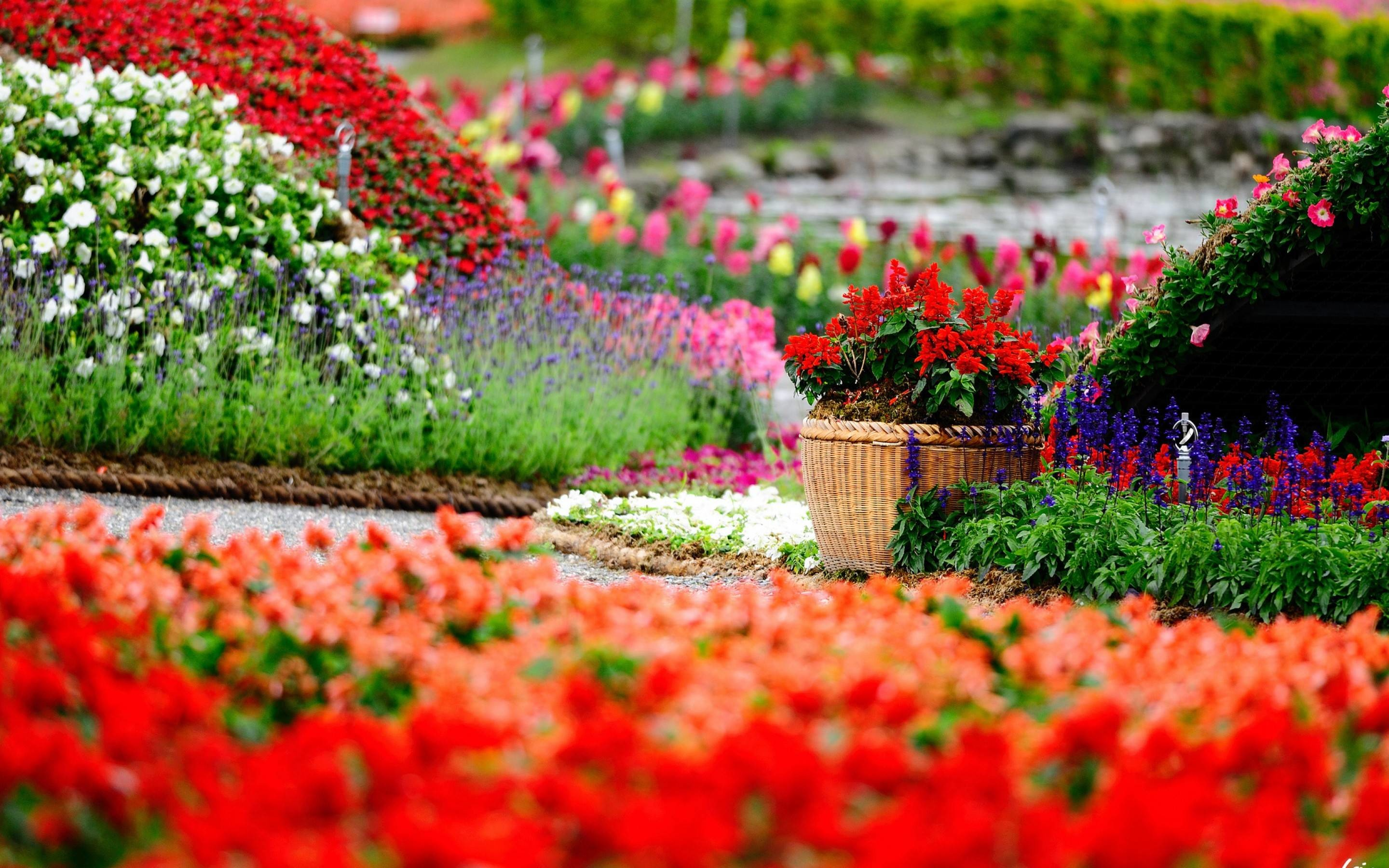 1920x1080 Incredible Free Hd Garden Wallpapers Download Flower Images Royalty