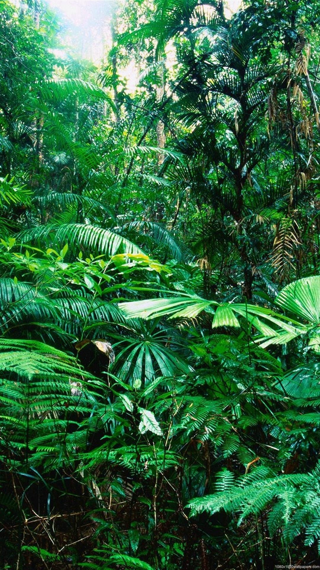 Rainforest Wallpapers 65 Background Pictures